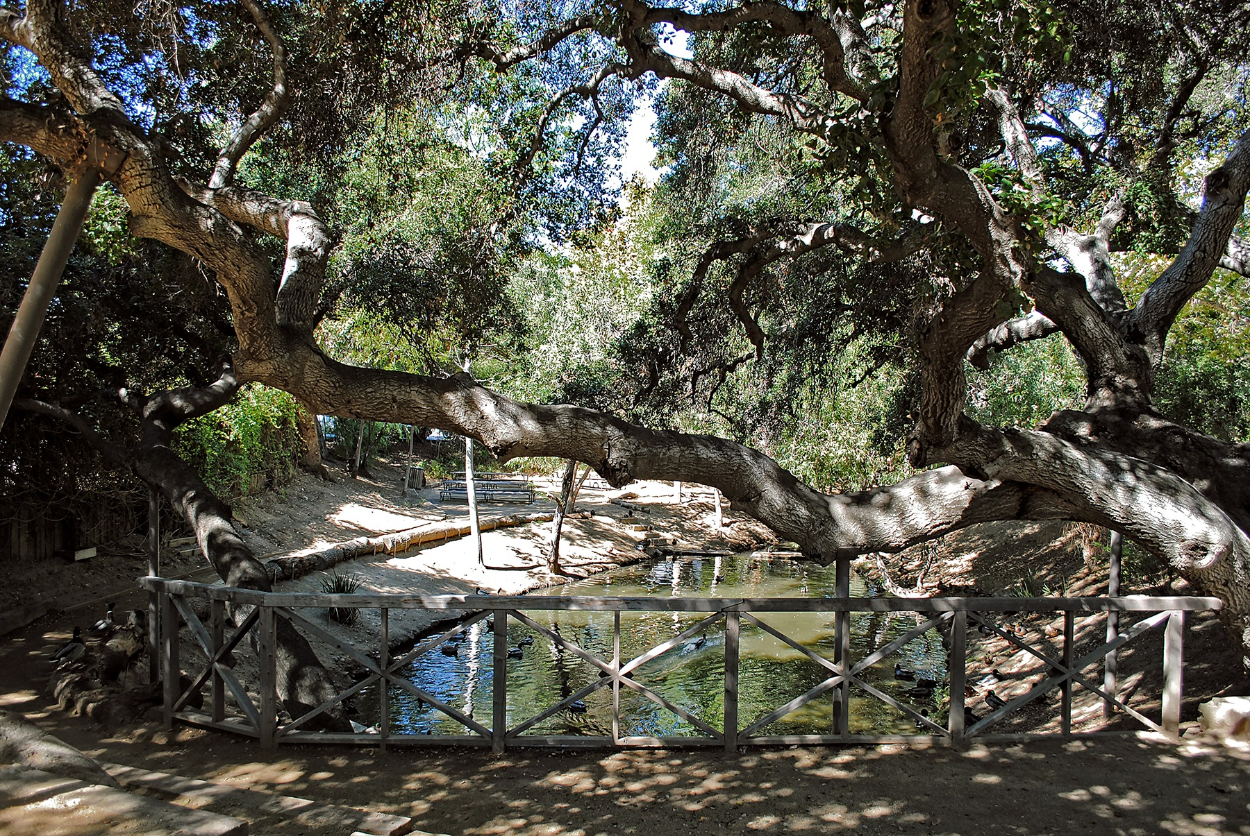 Large oak tree branch by Lormet-Images