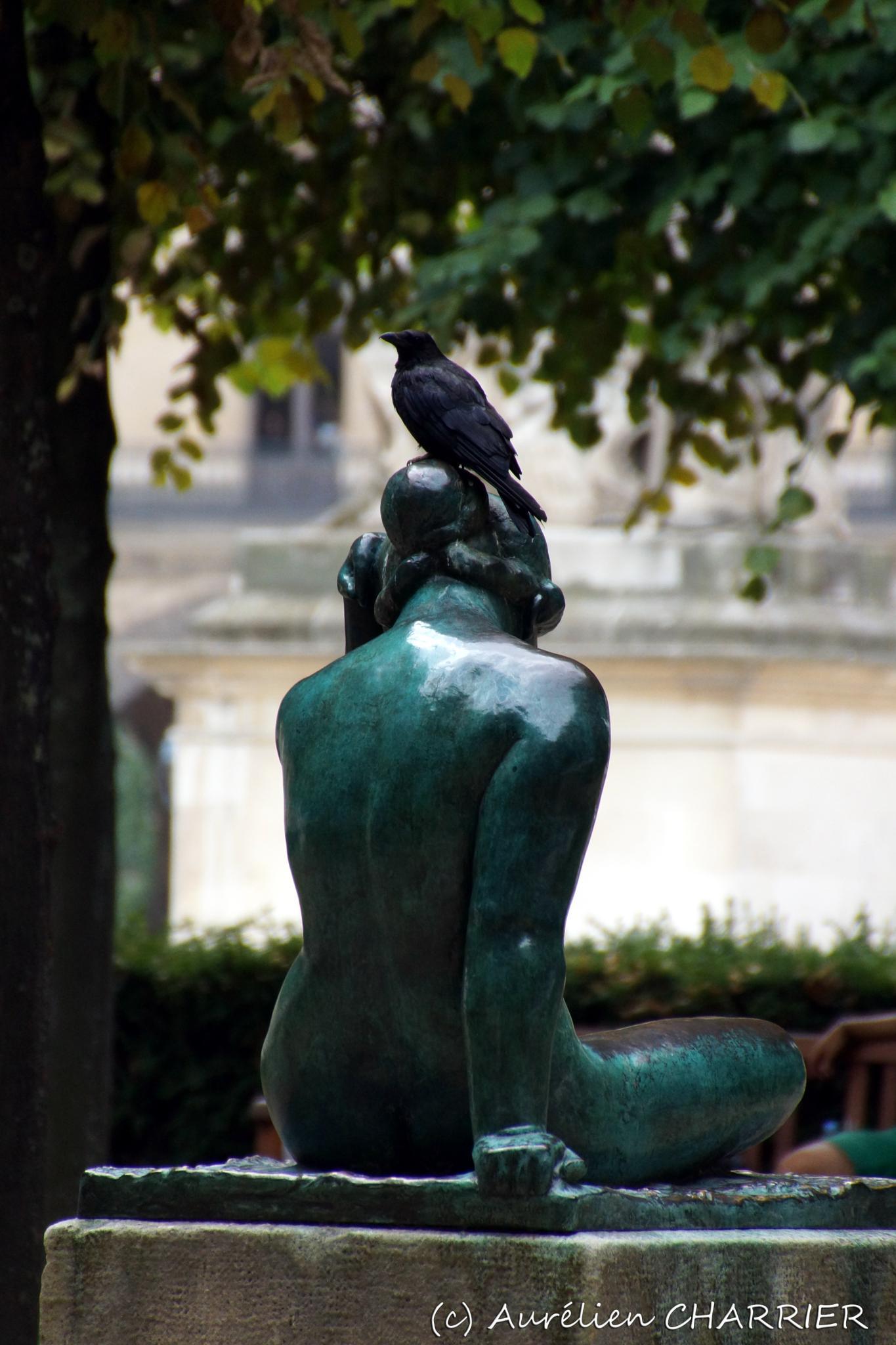 The Artist Crow, near the Louvre Museum, Paris, FRANCE by Aurélien CHARRIER