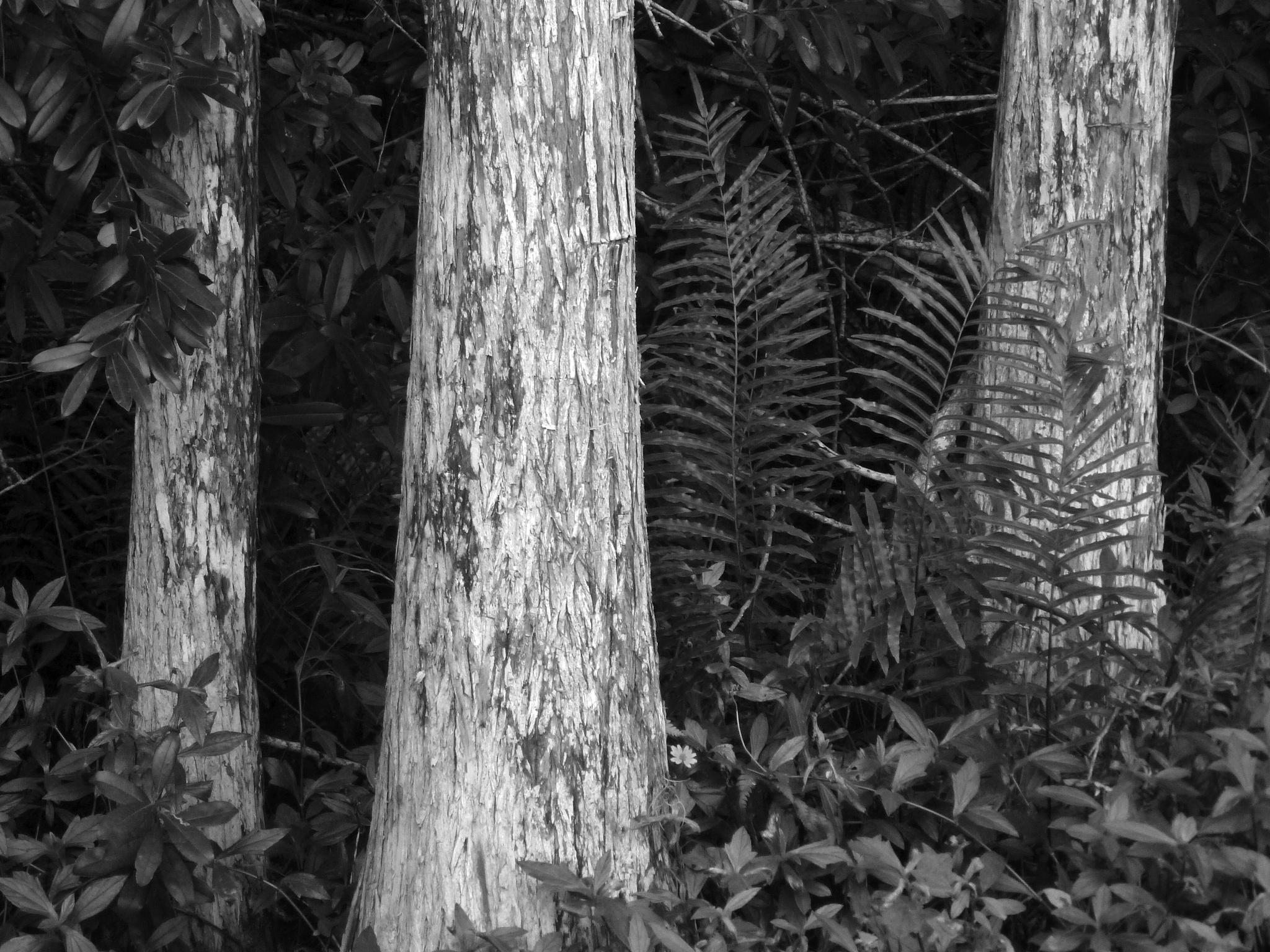 Tree strength by downwindpassage