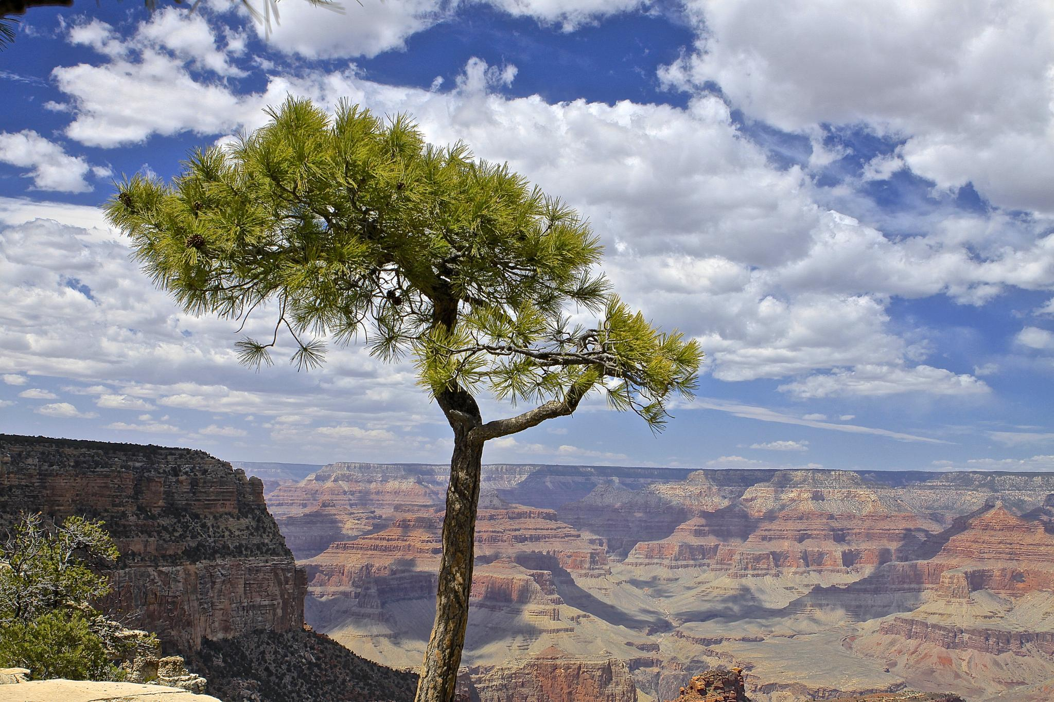 At the Grand Canyon by Tom Ratigan