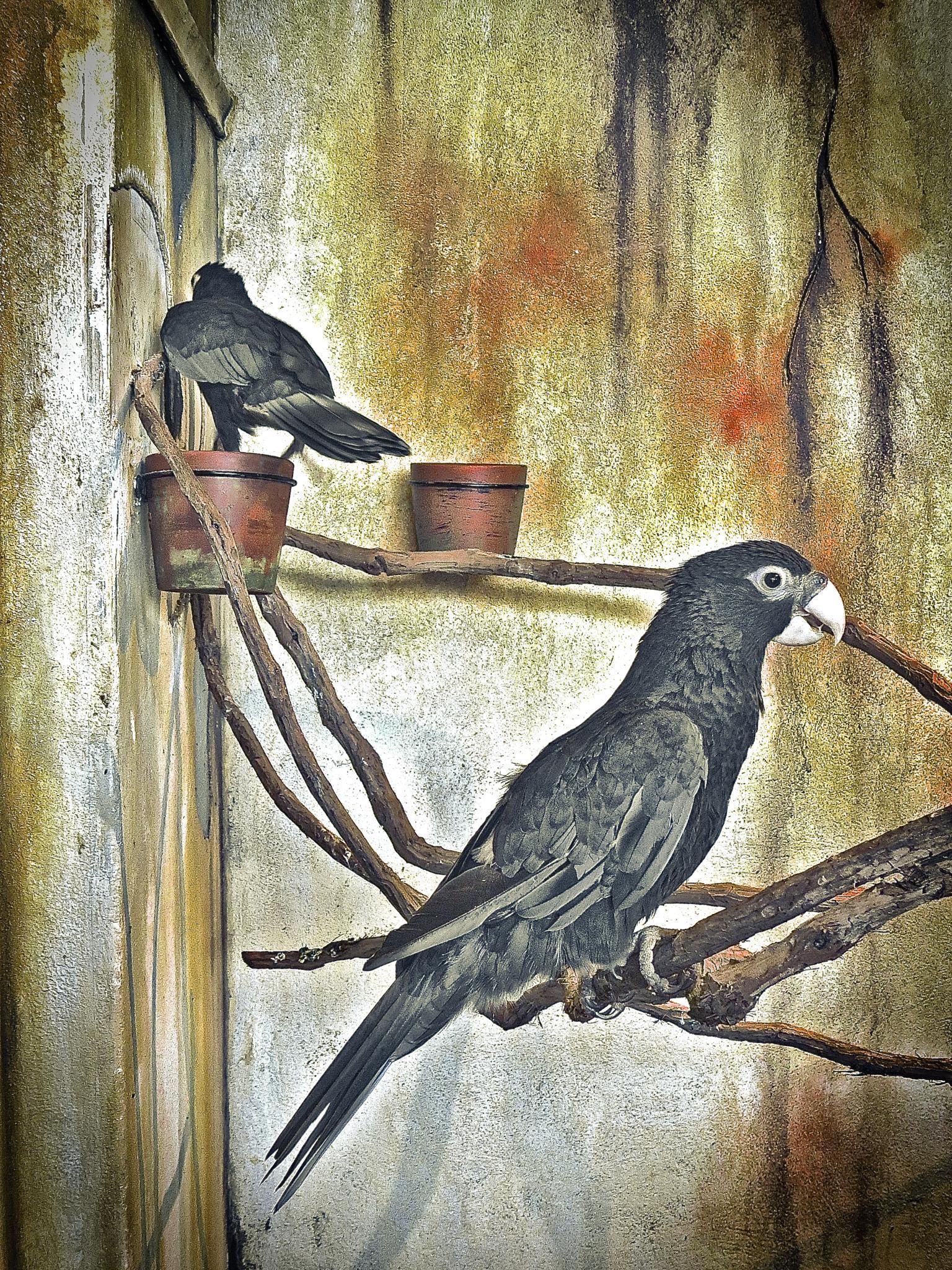 Birds by Tom Ratigan