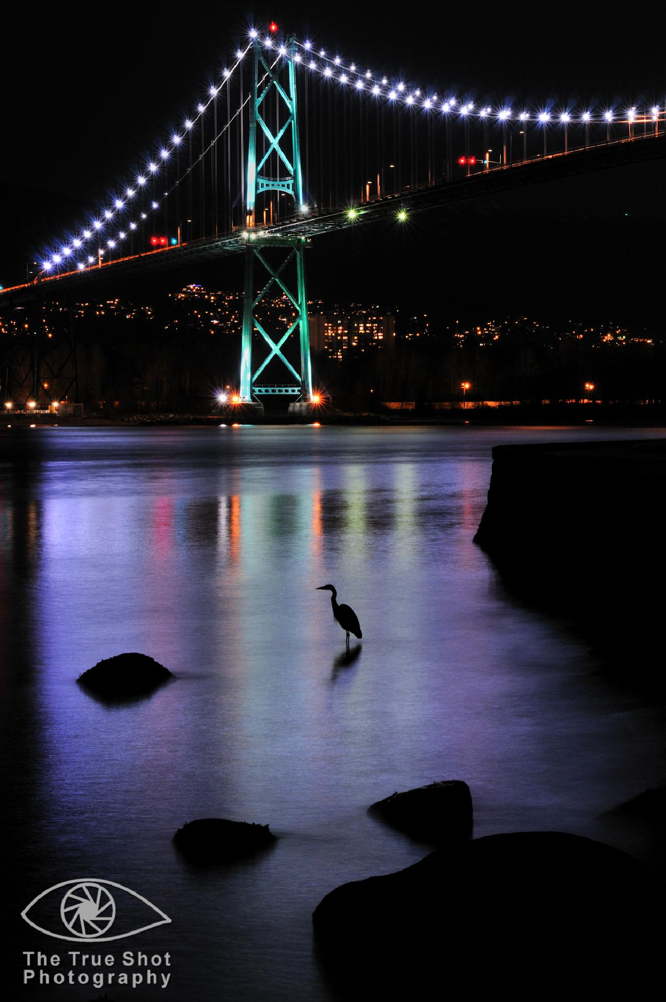 Heron Under Lions Gate by The True Shot Photography