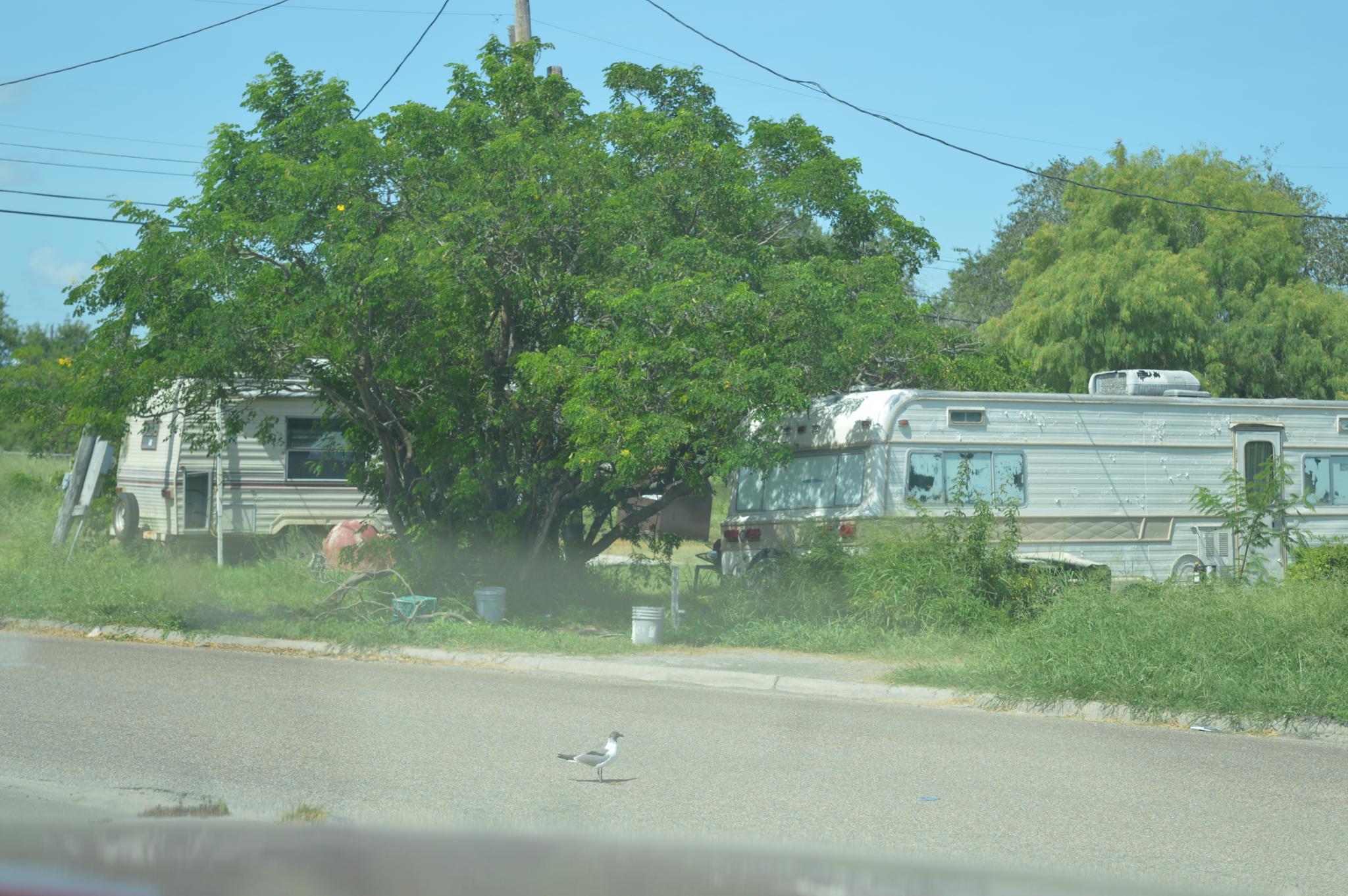 Kingsville Texas Trailor Park by barbarasingscntry23
