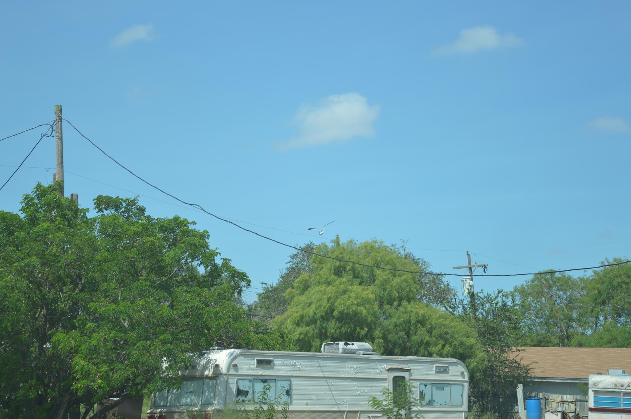Kingsville Texas by barbarasingscntry23