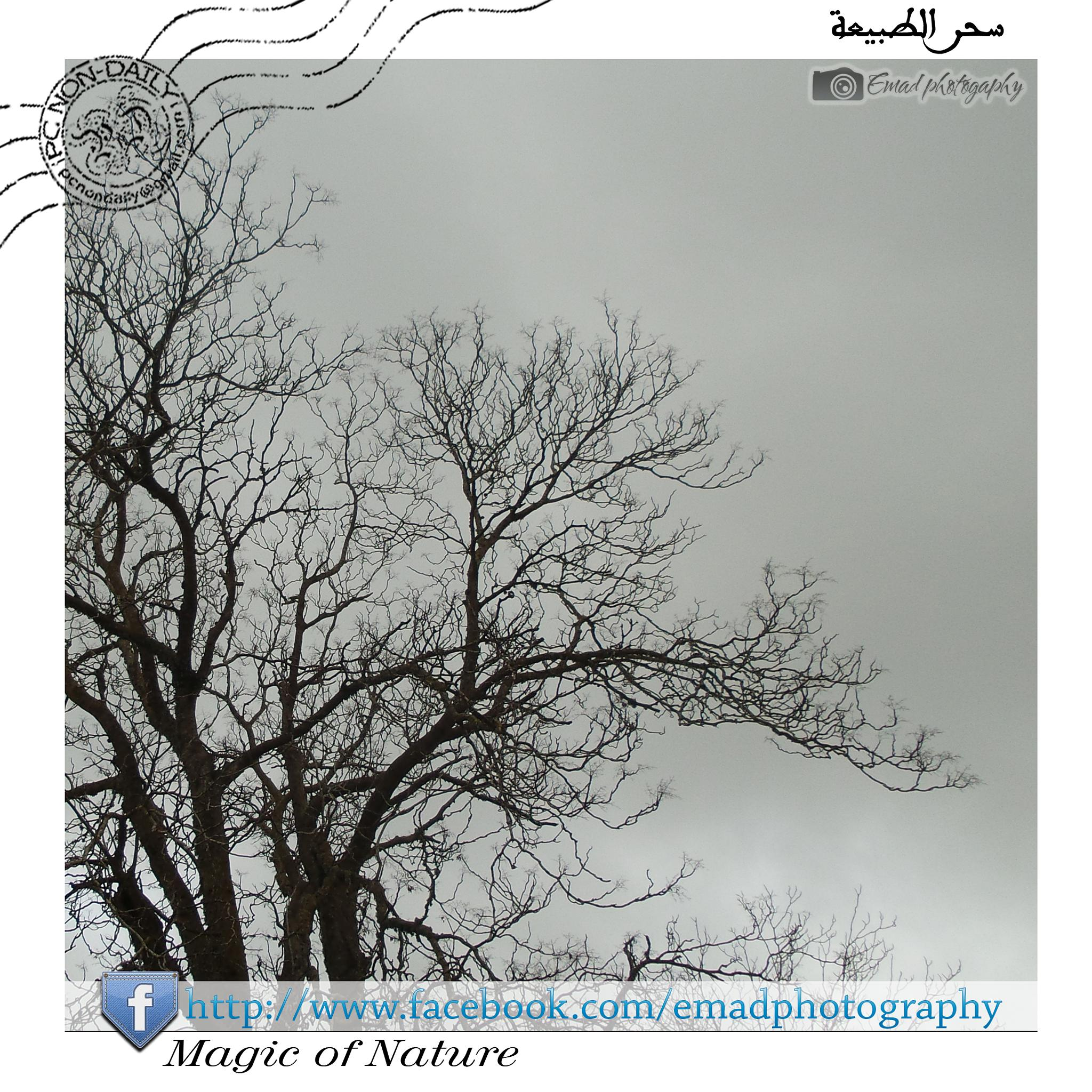 magic of nature by jbalario عماد الجبالي
