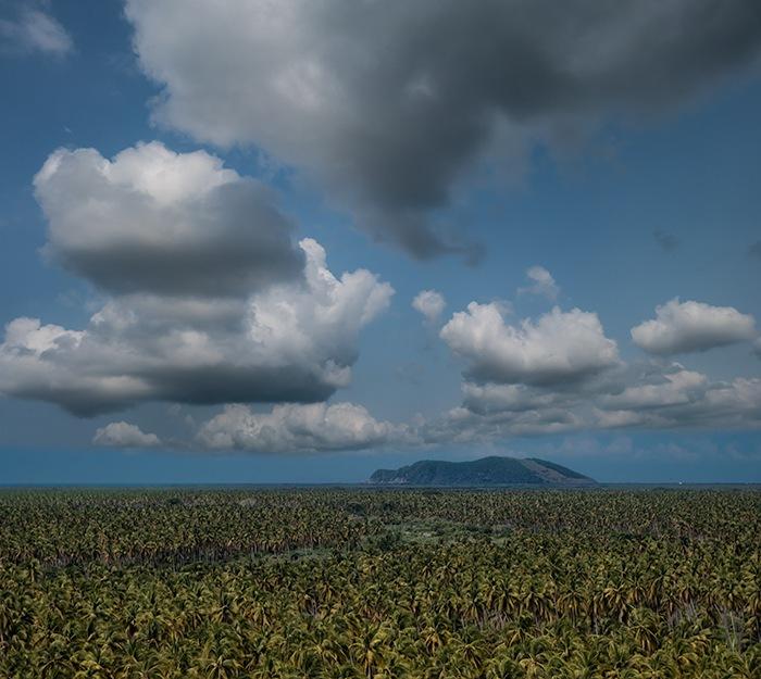 Guerrero Banana Plantation by wilson