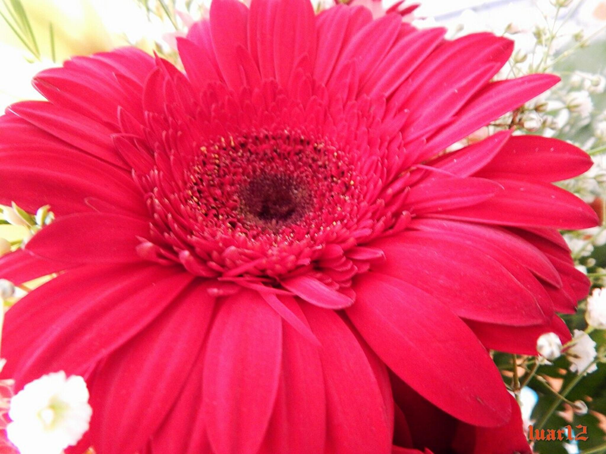 Flor by luar12