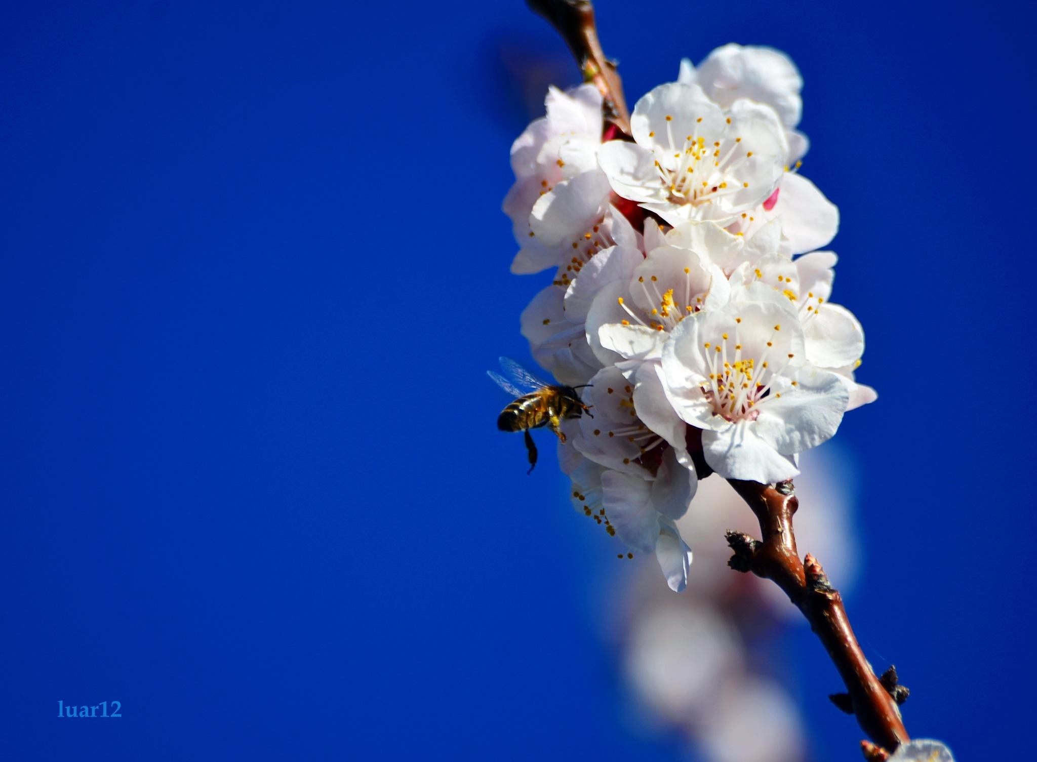 flores by luar12