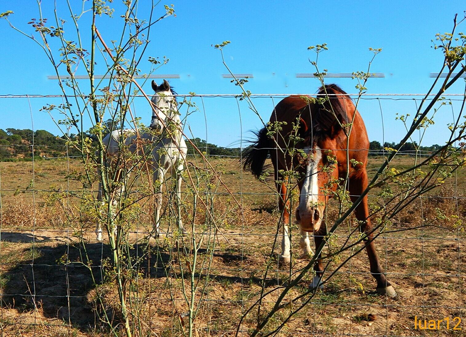 Cavalos by luar12