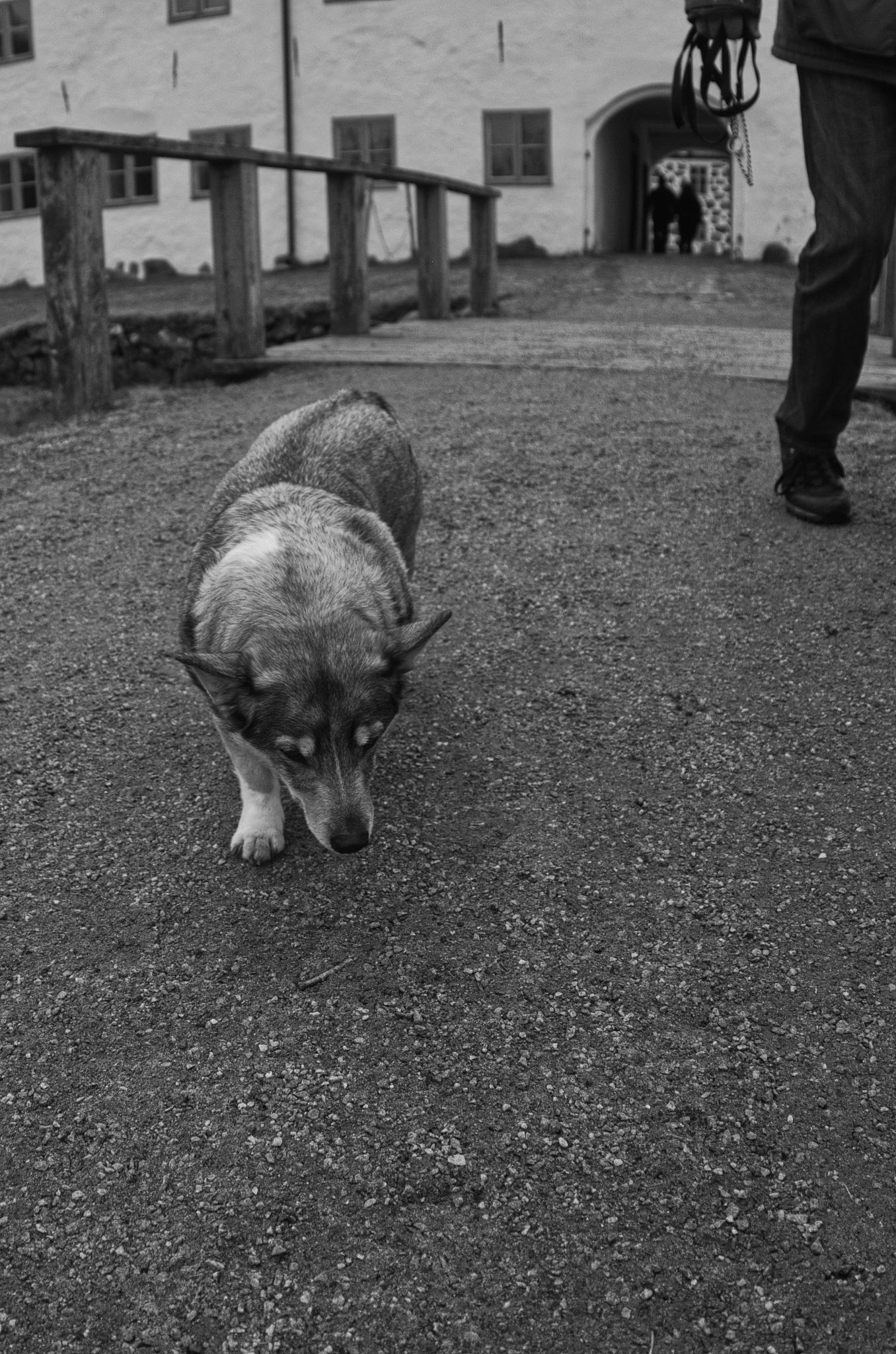 Old Dog by Mattias Fogelberg