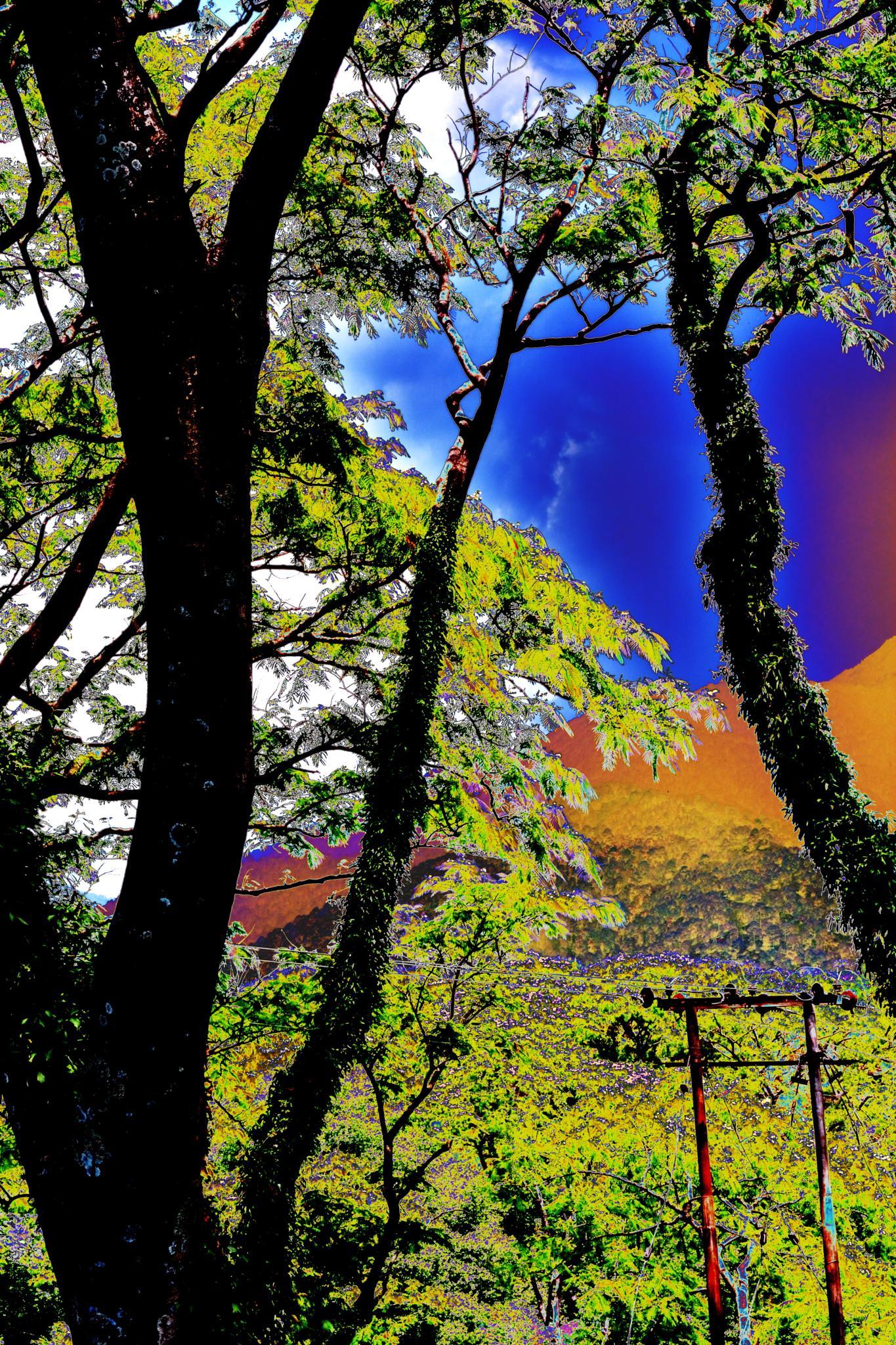 Photo Art-3 by Soummo