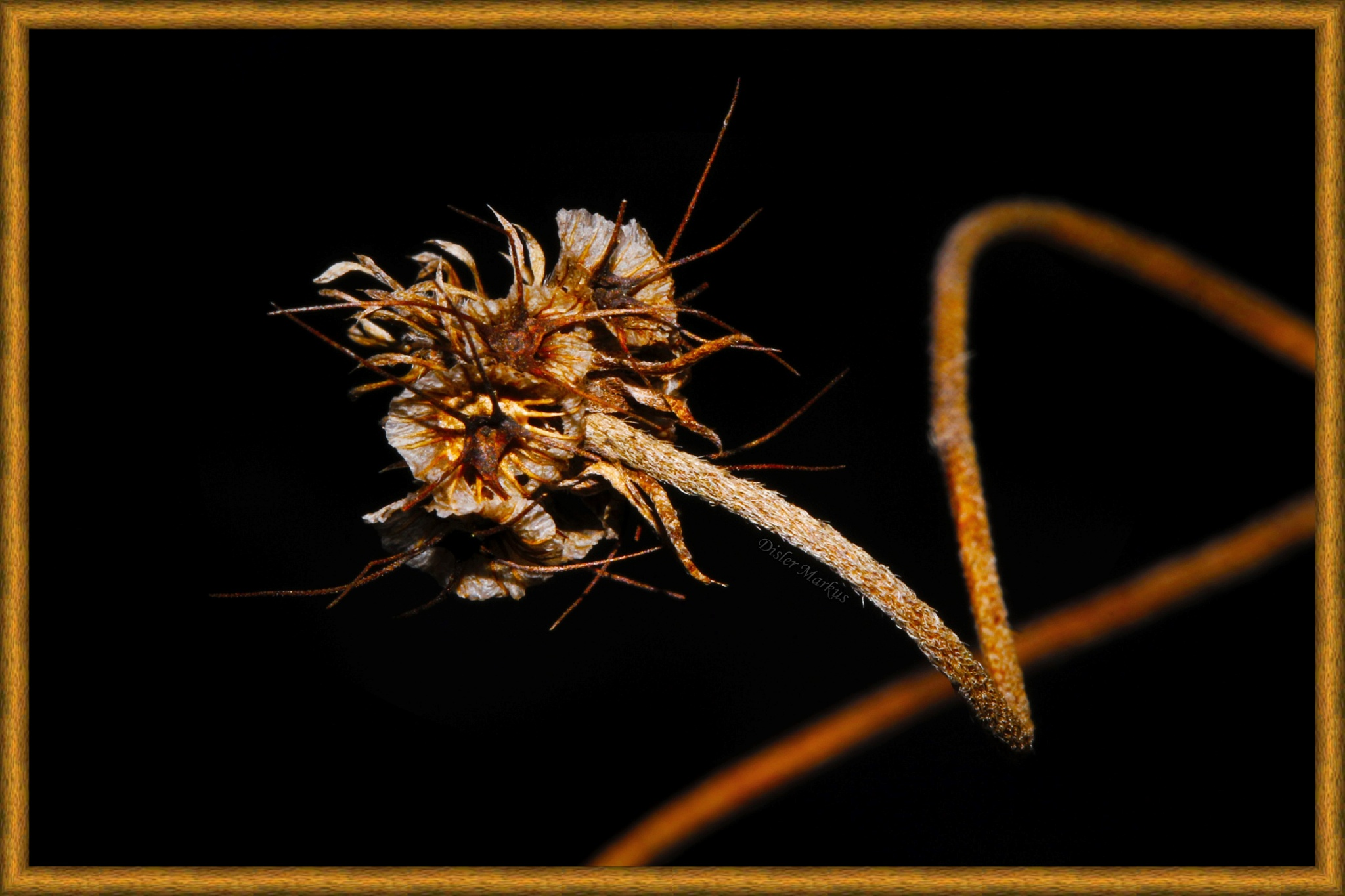 The Art of Nature. by Disler Markus