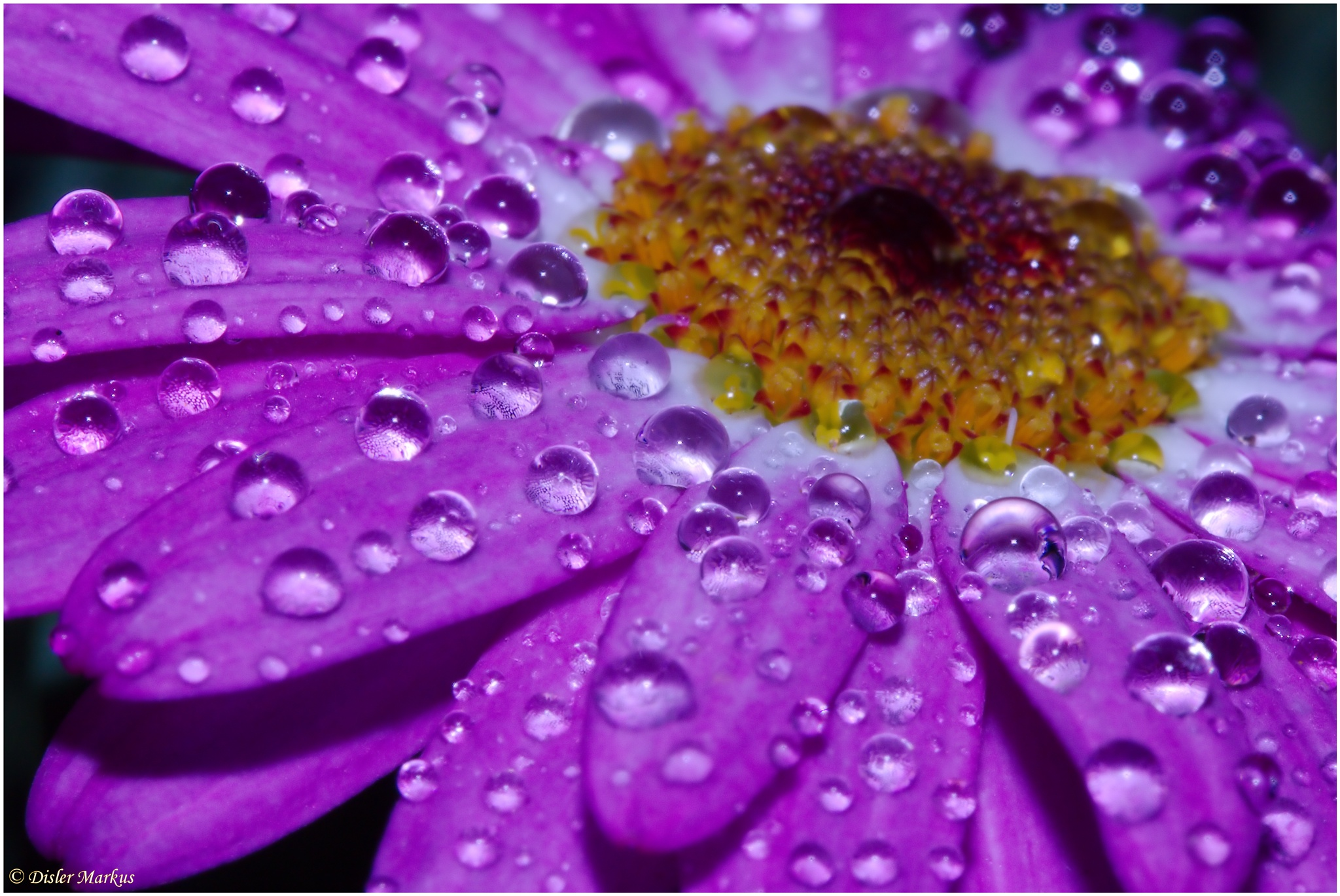After the rain (Part 6) by Disler Markus