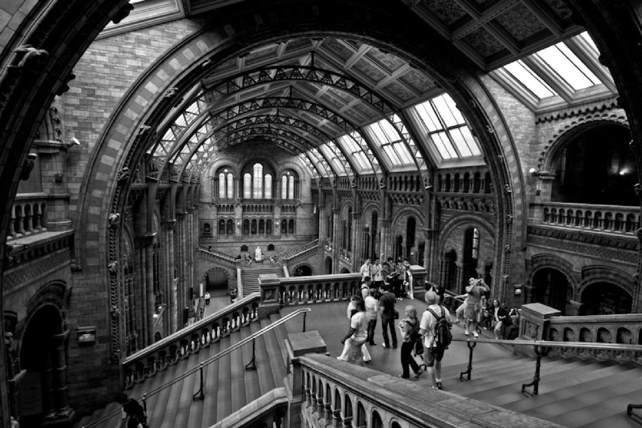 Natural History Museum by Stephen Holmes