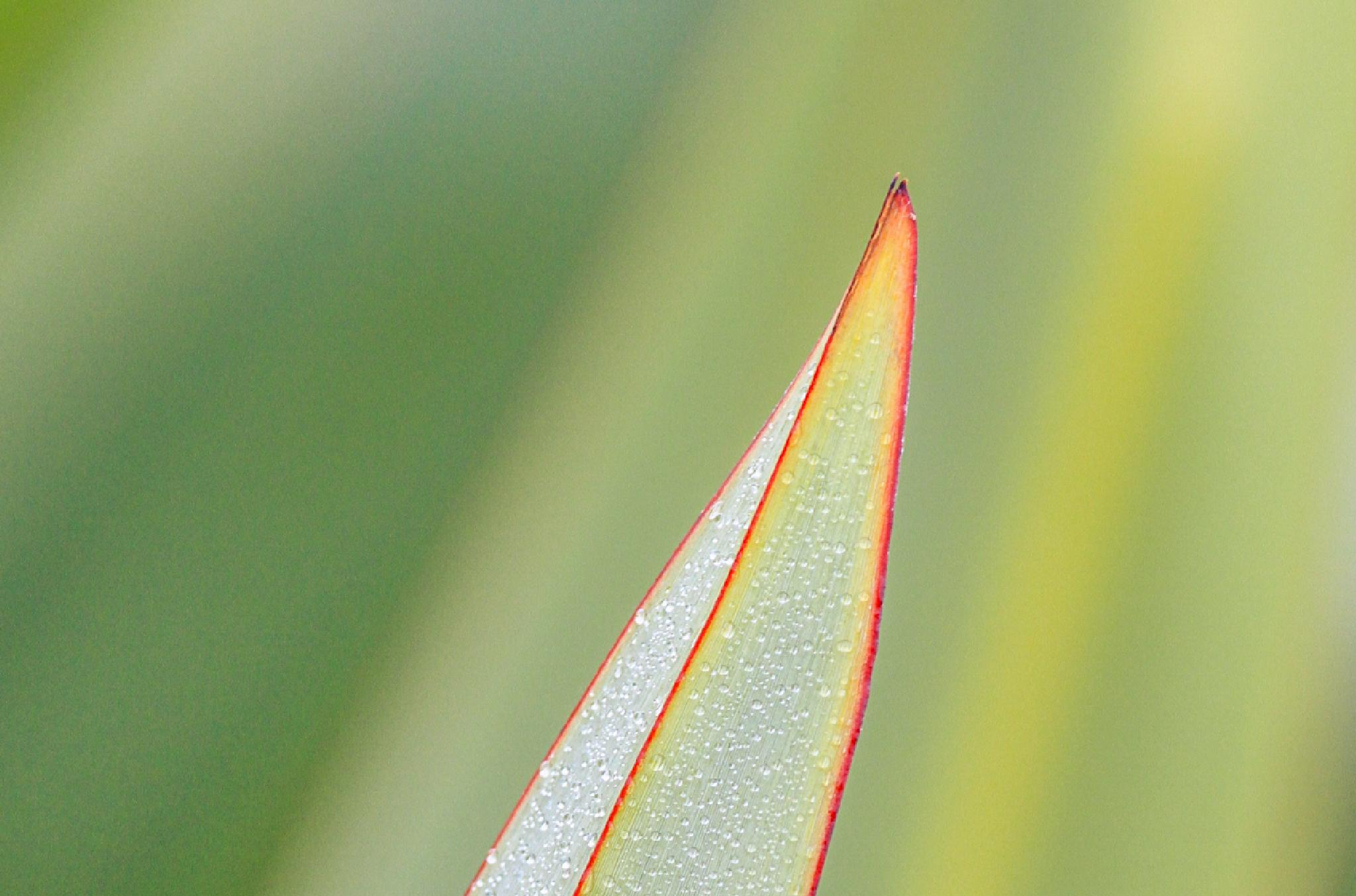 Dew on a leaf by MarkBriscoe