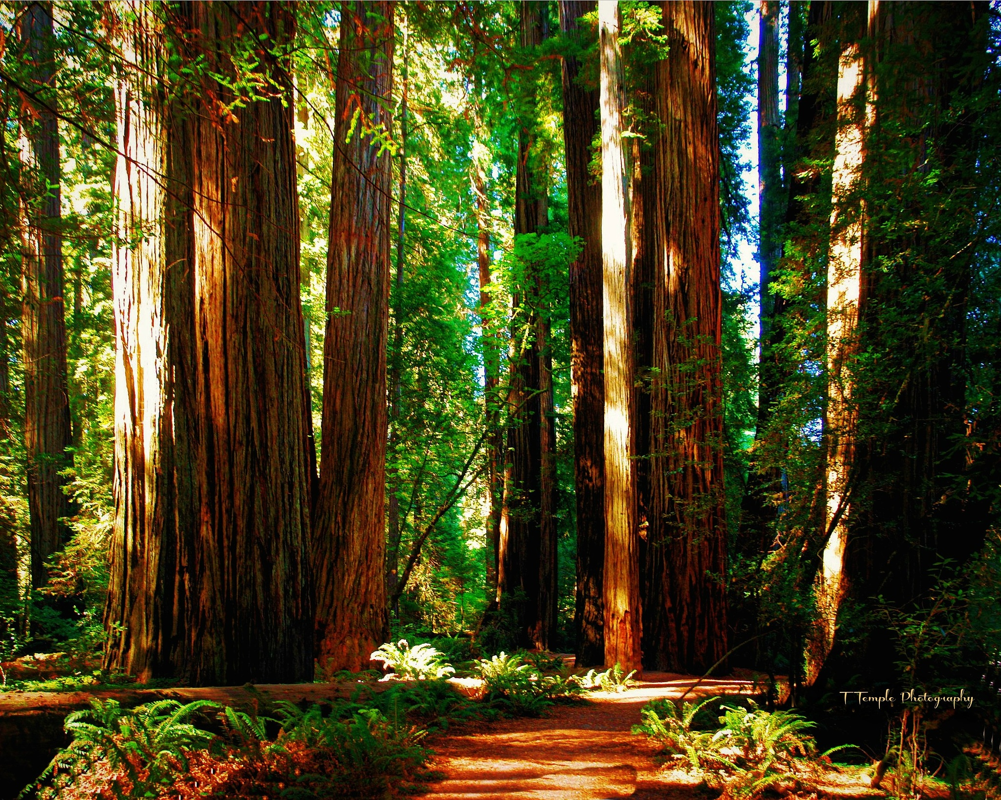 Photo in Nature #forrest #california #russian river #redwoods #nature