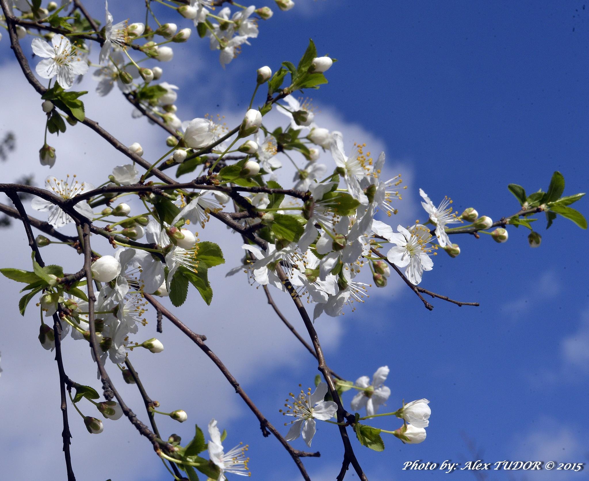 Spring flowers by alextudor84