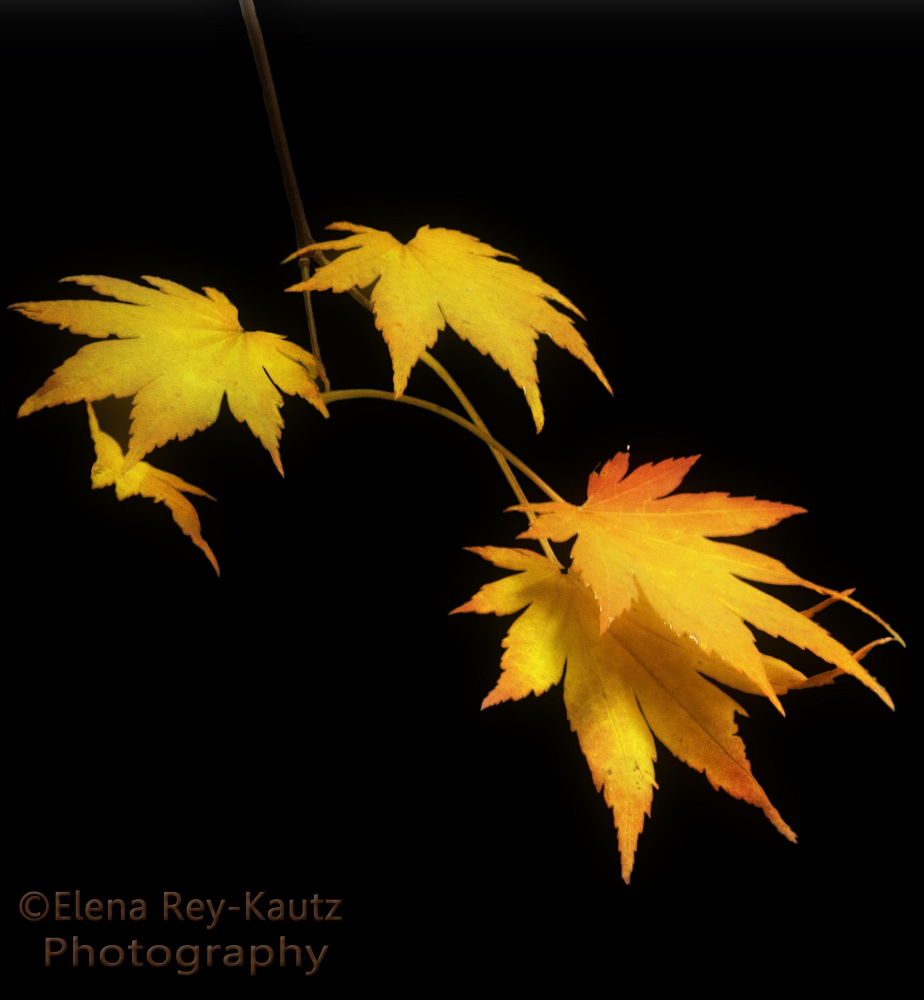 Last Glow by Elena RK