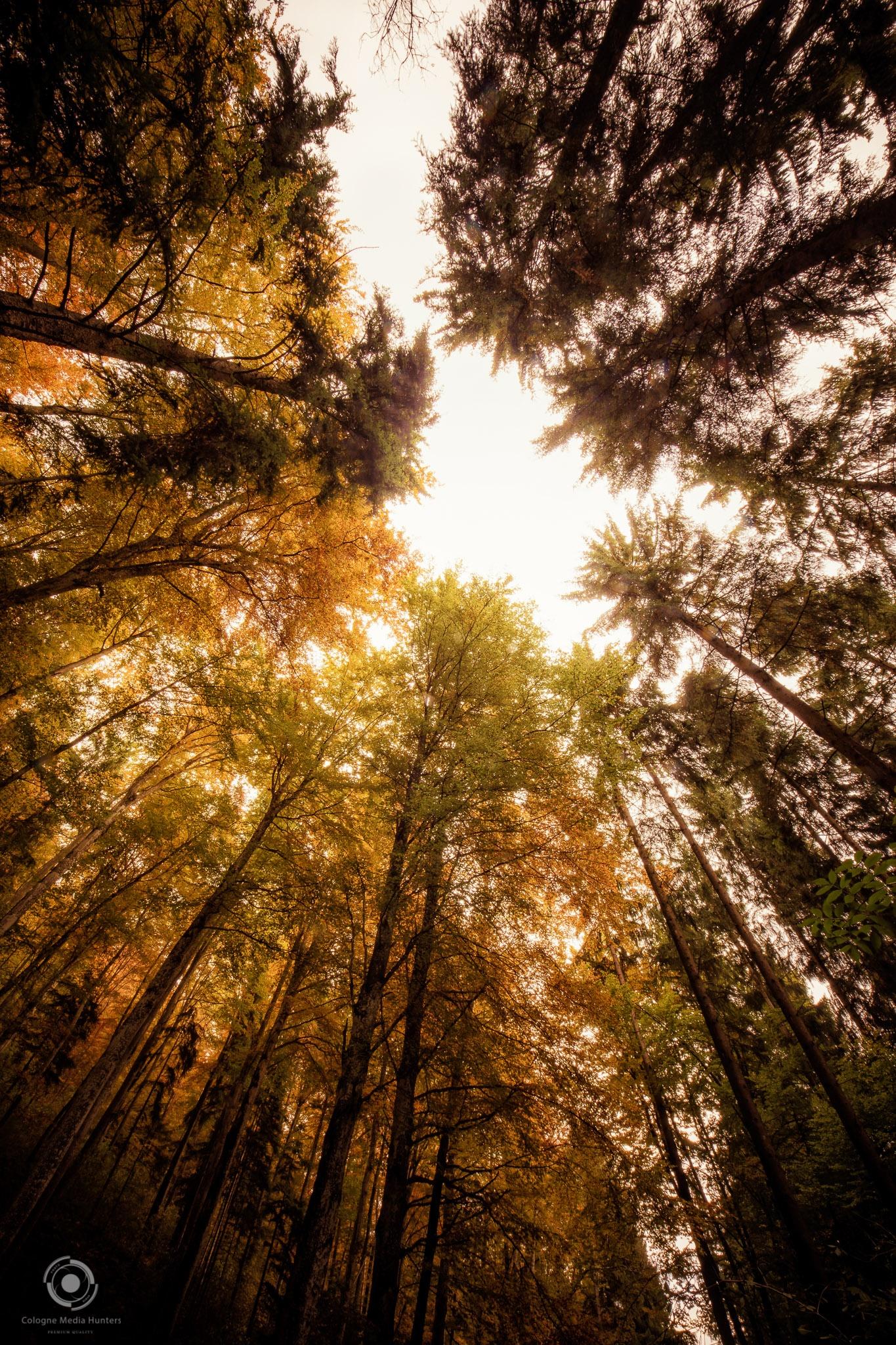 Entstanden letztes Jahr im Nationalpark Schwarzwald. by CmH