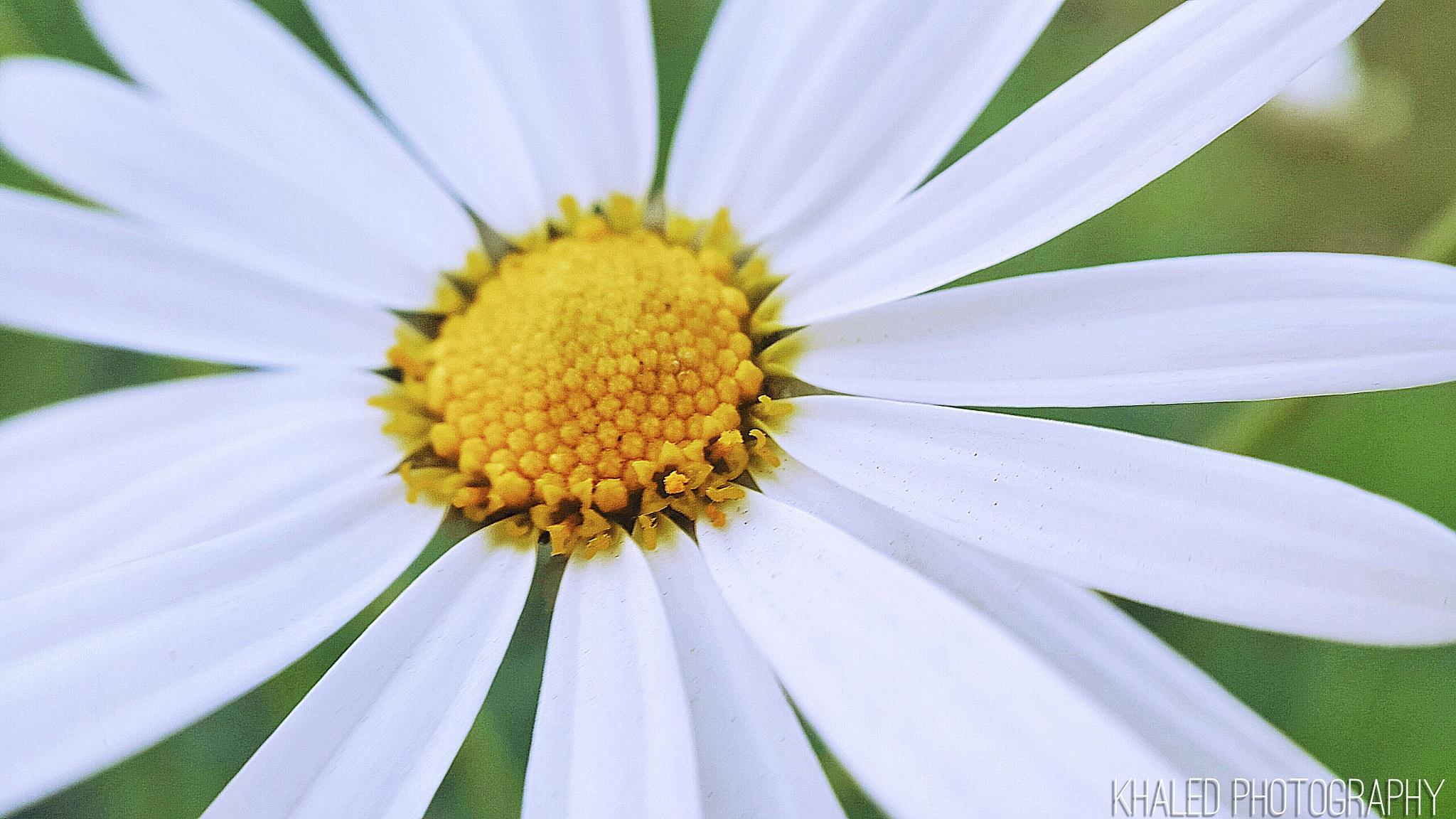 Beautiful flower by Hamoud Khaled