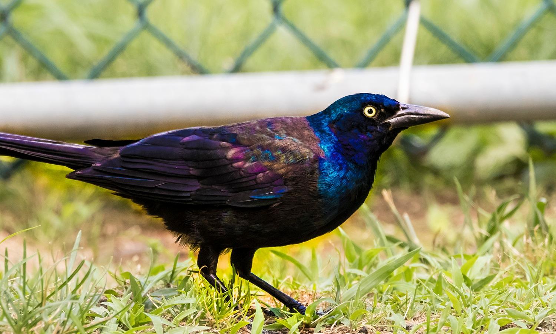 BYE BYE BLACK BIRD by scm502000
