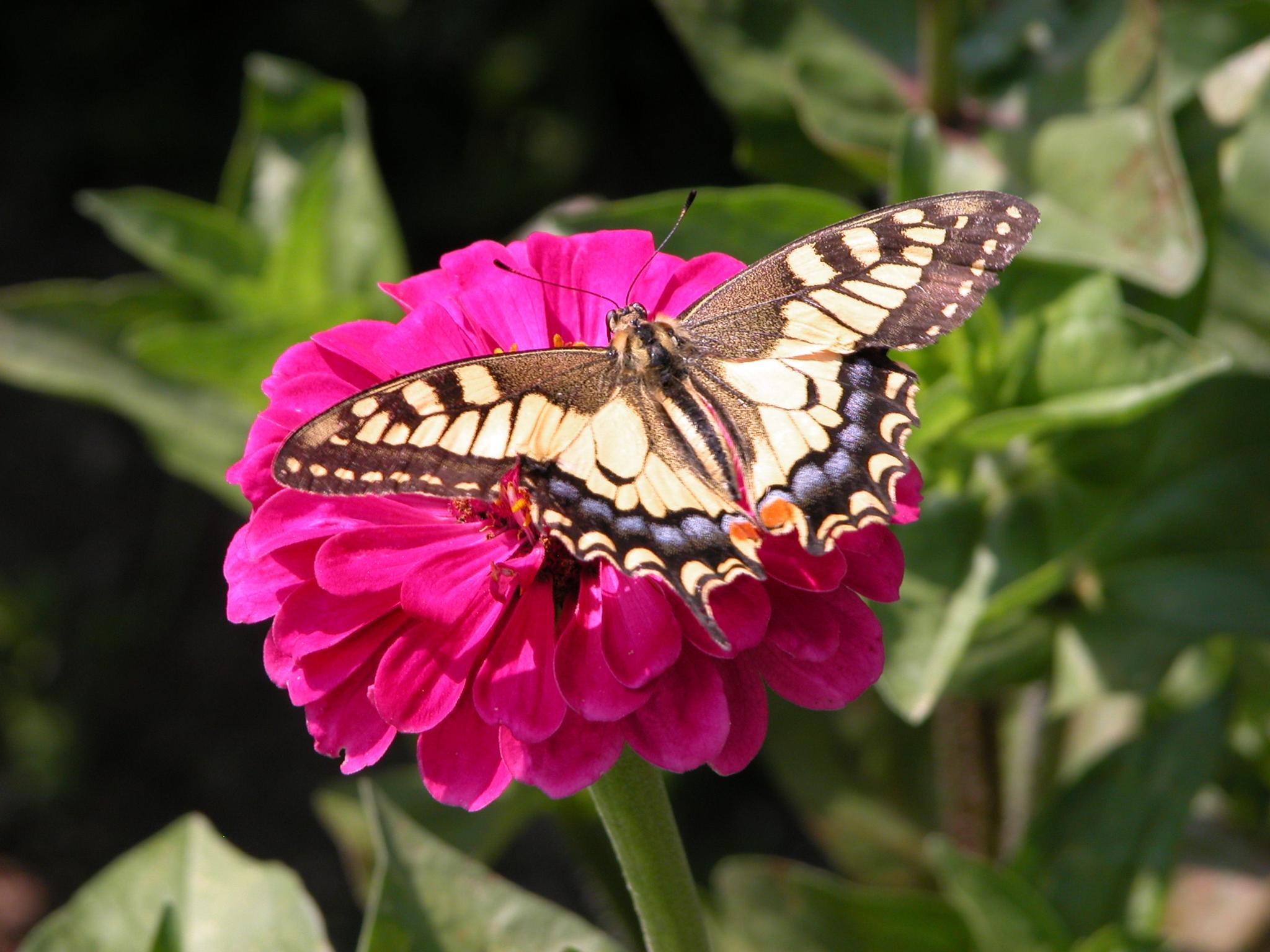 Butterfly on the flower by Ahmed Meštrovac