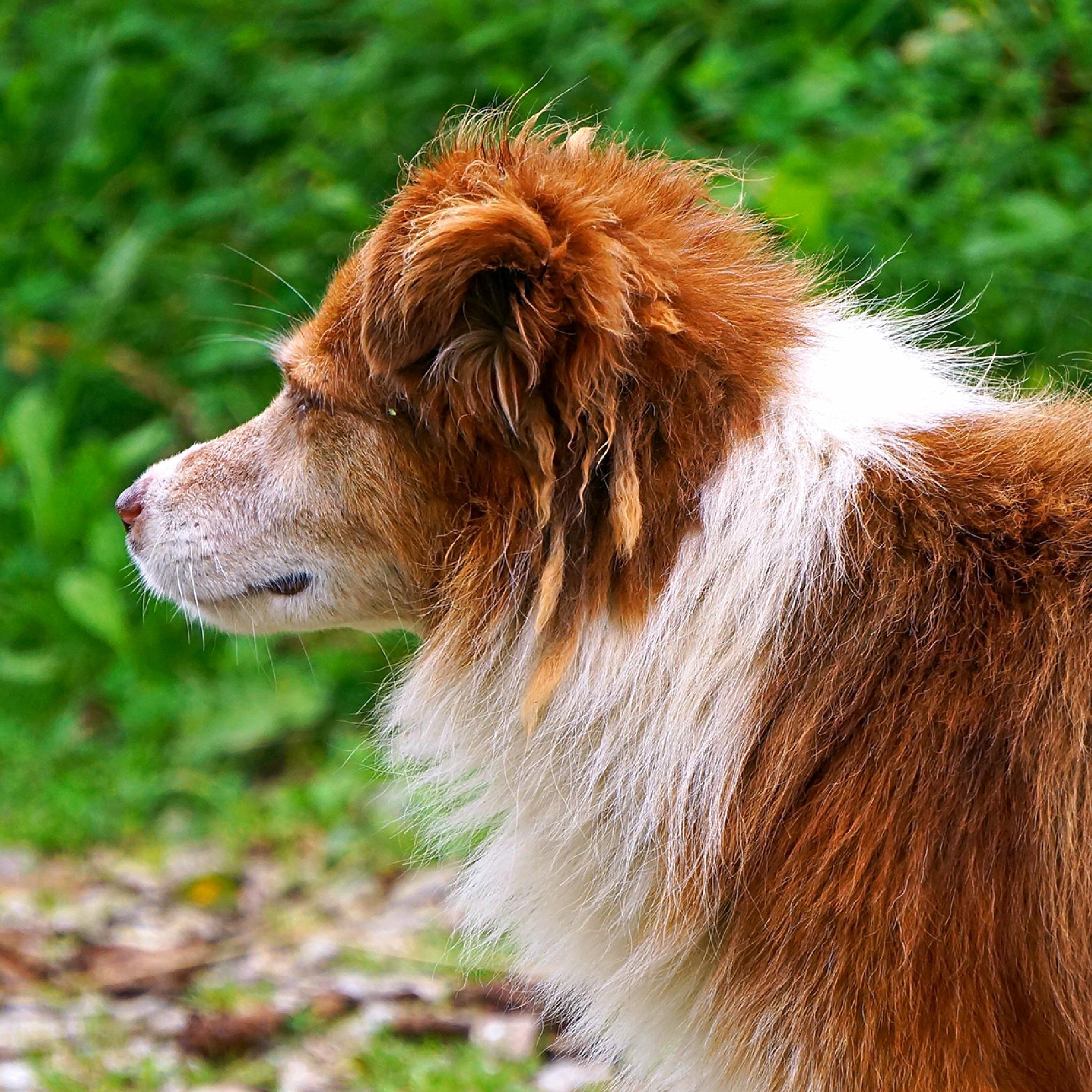 Dog by NenadO