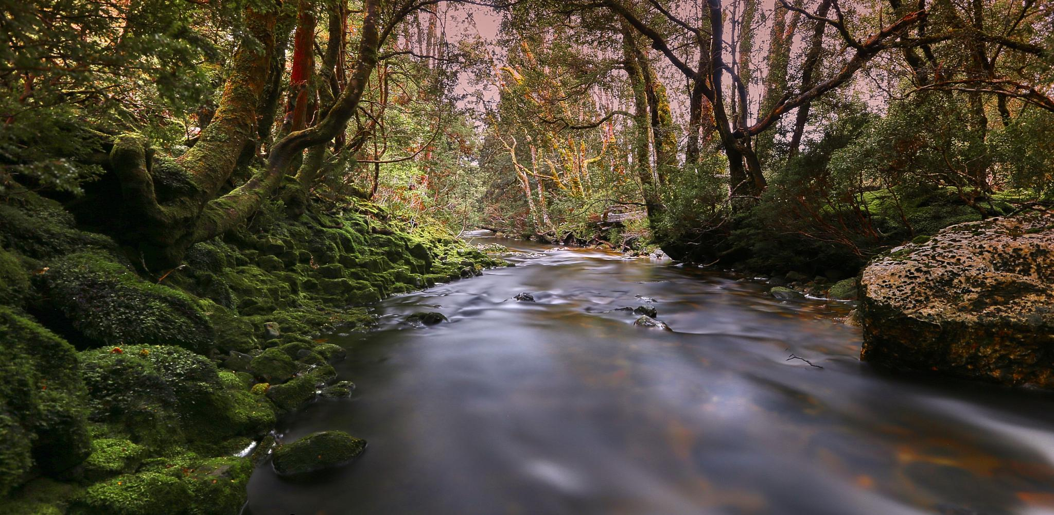 Cradle Mountain Stream by mikenutt