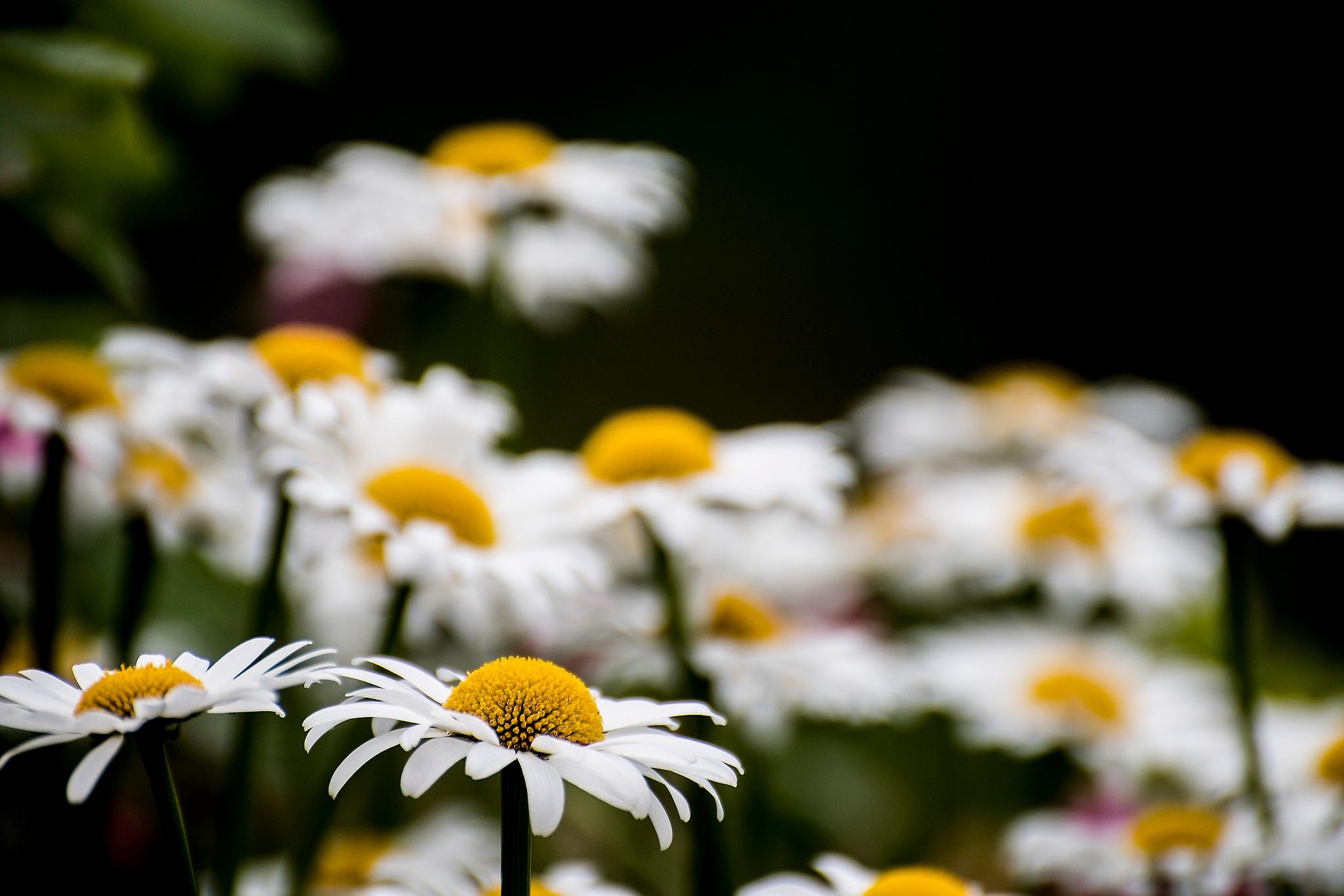 Summer flowers by IR-FOTO