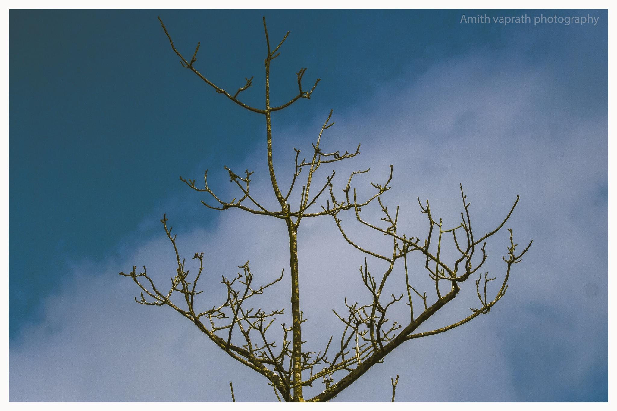 Untitled by Amith Vaprath