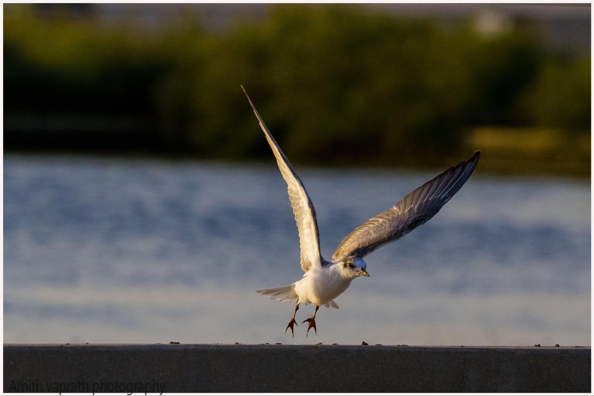 Take off by Amith Vaprath