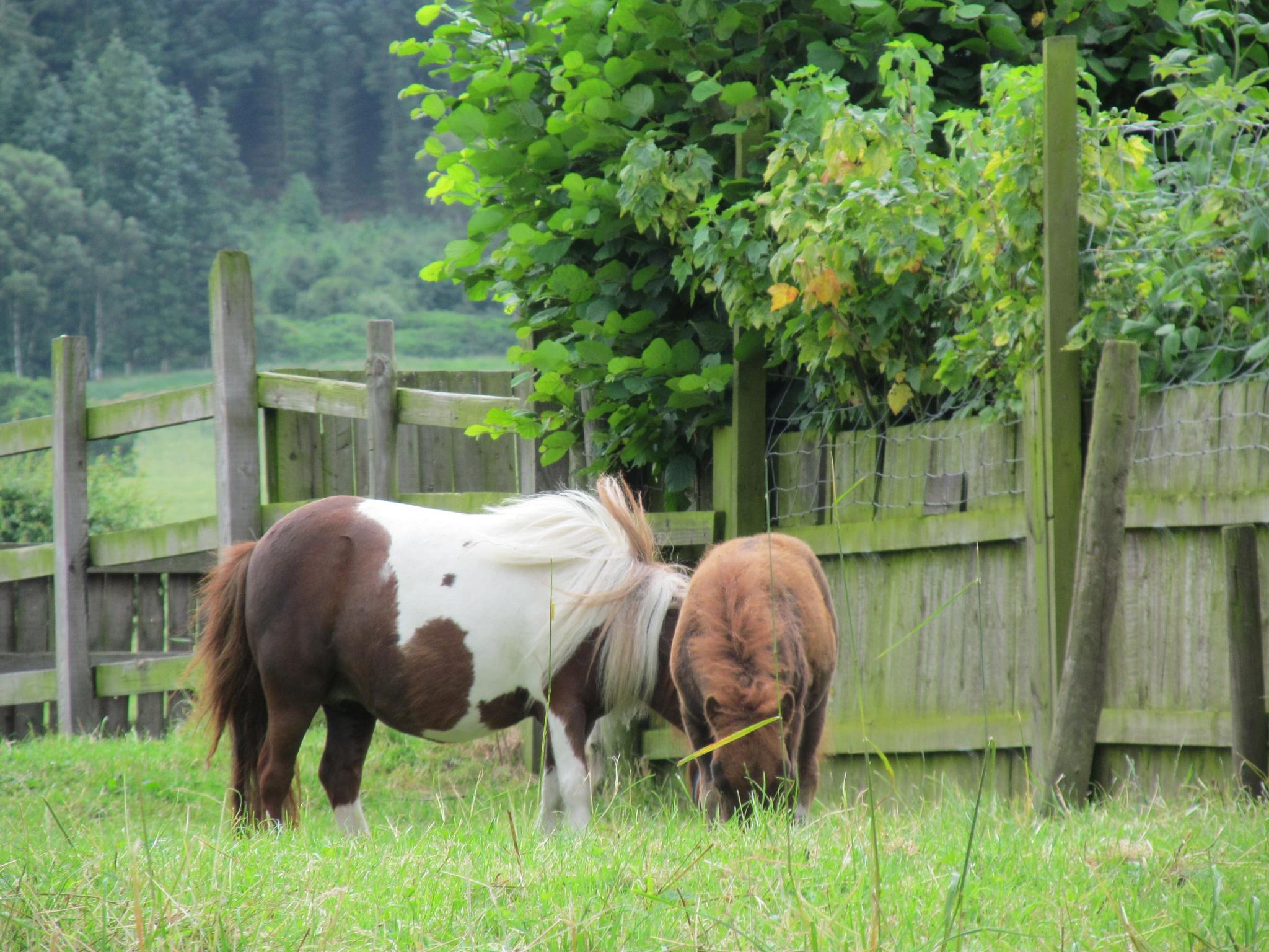 Nice horses by joan croll