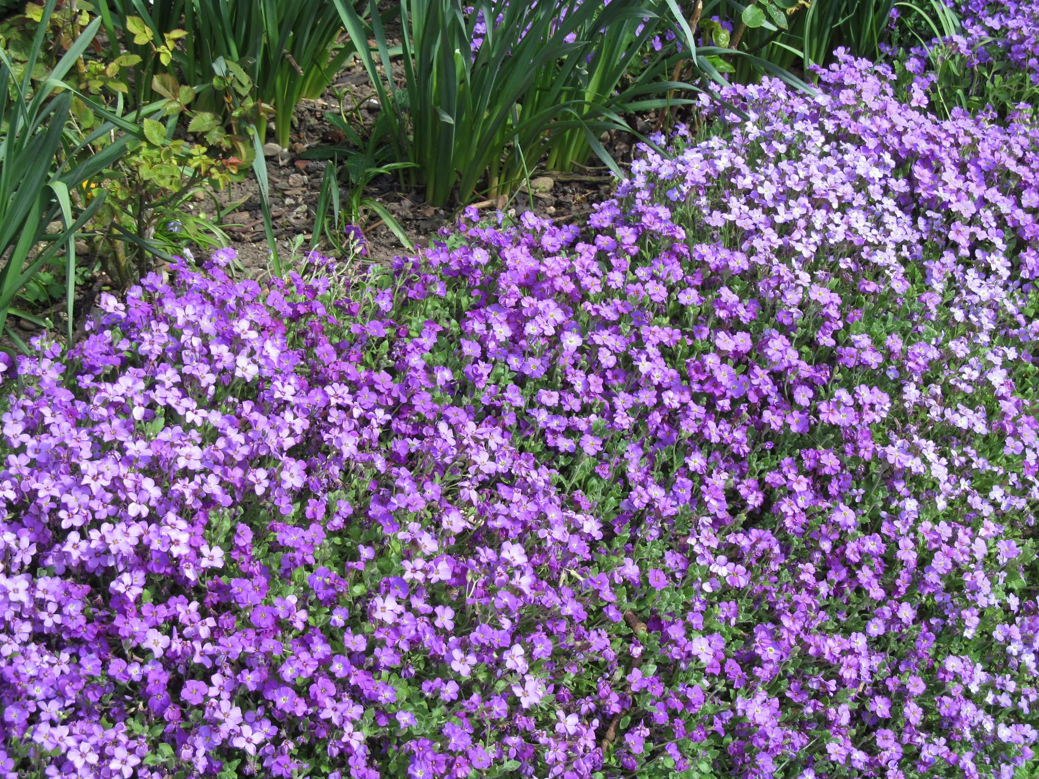 Flowers by joan croll