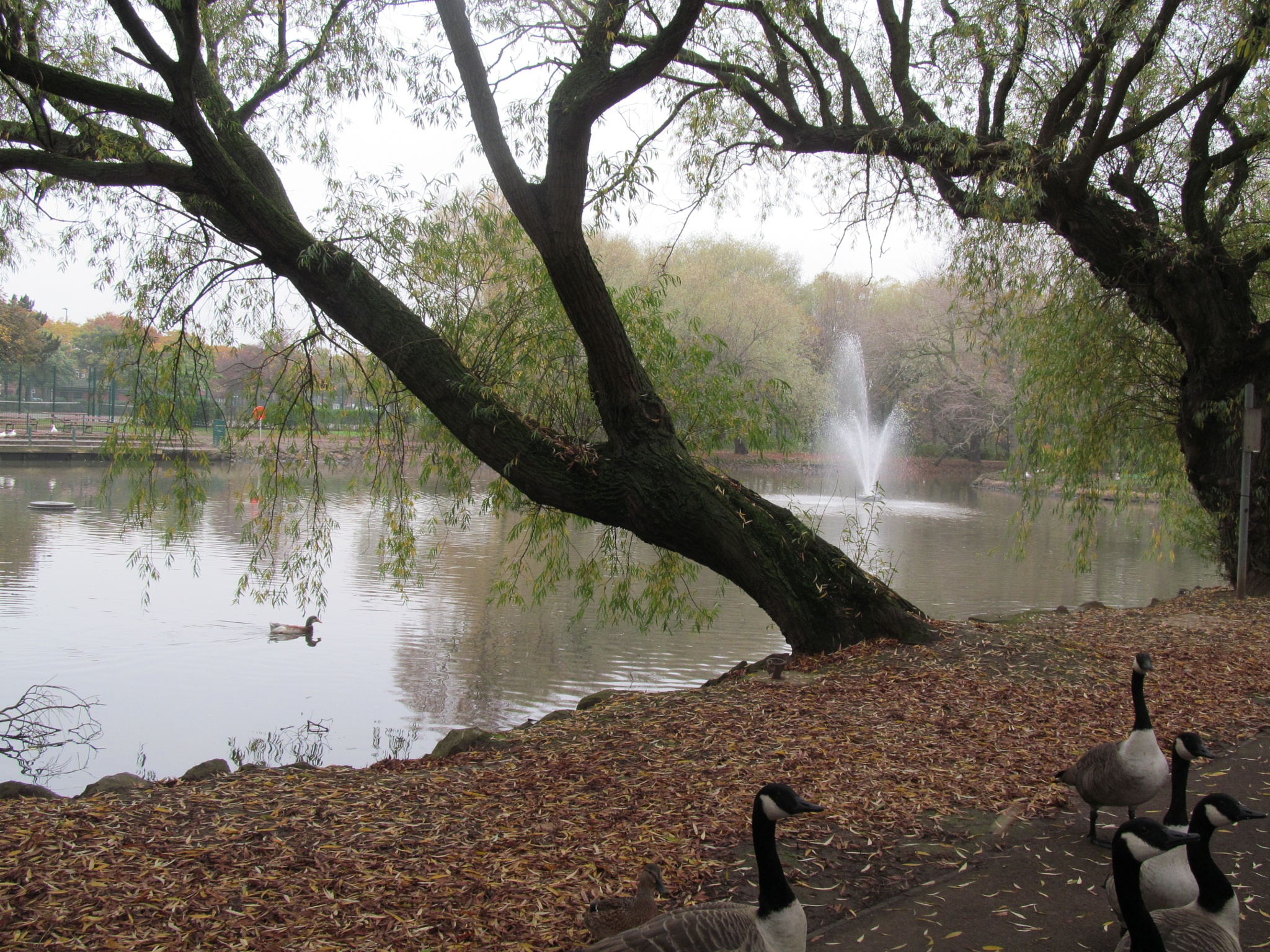 Lake by joan croll