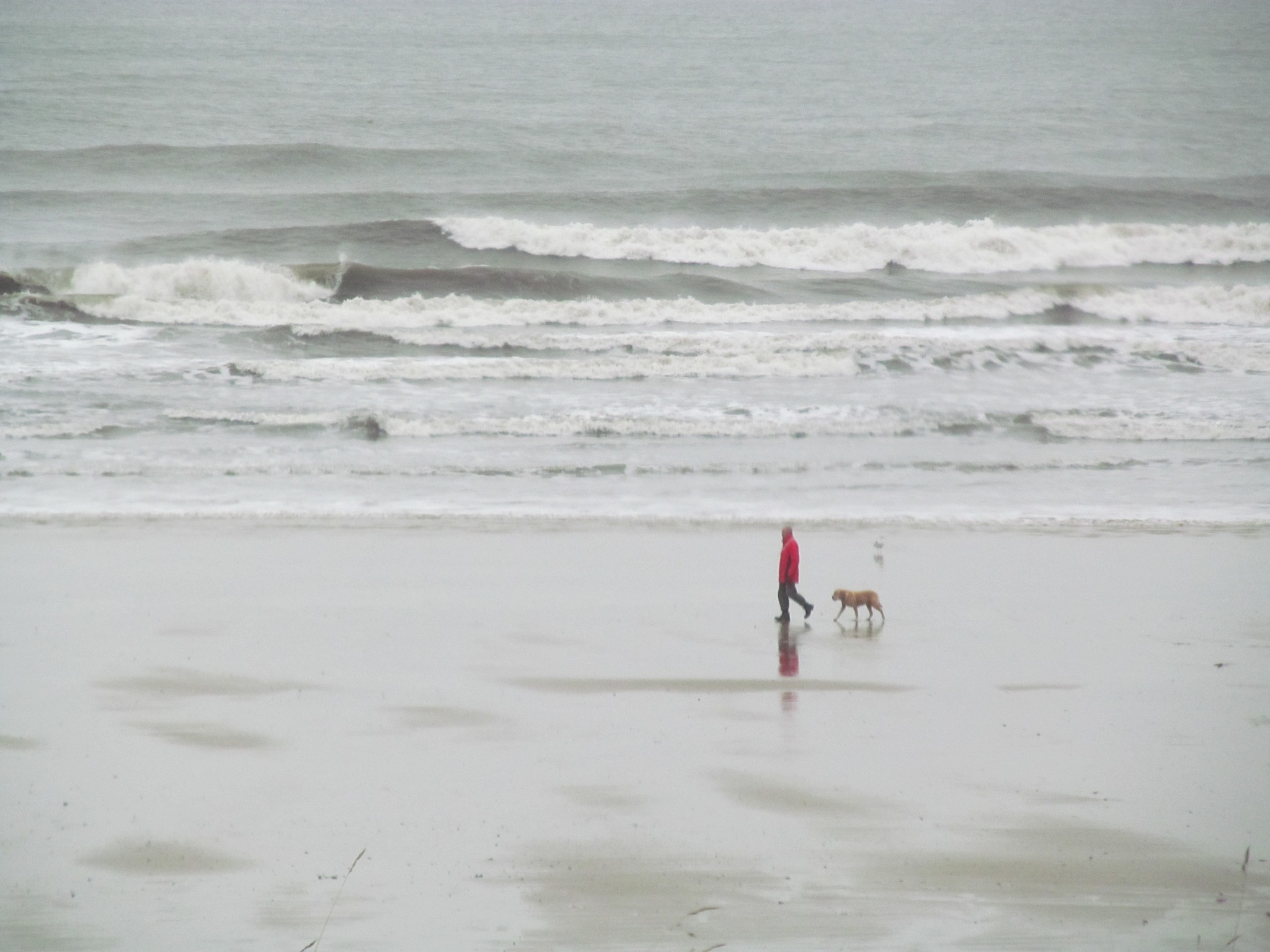 A lone dog walker by joan croll