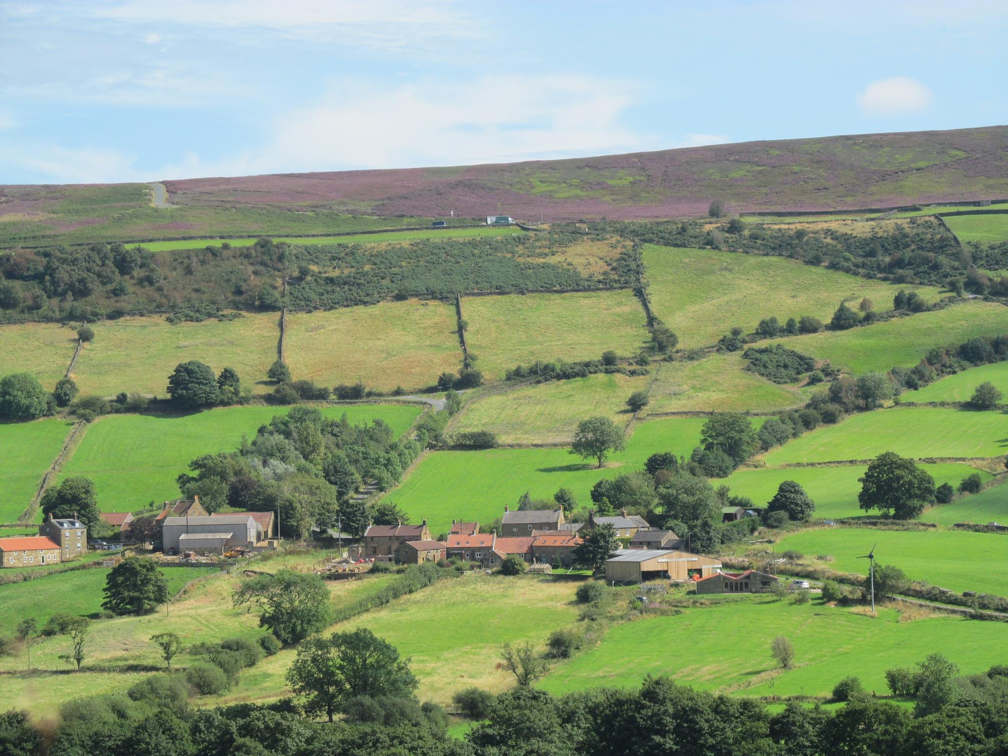 Patchwork of fields by joan croll