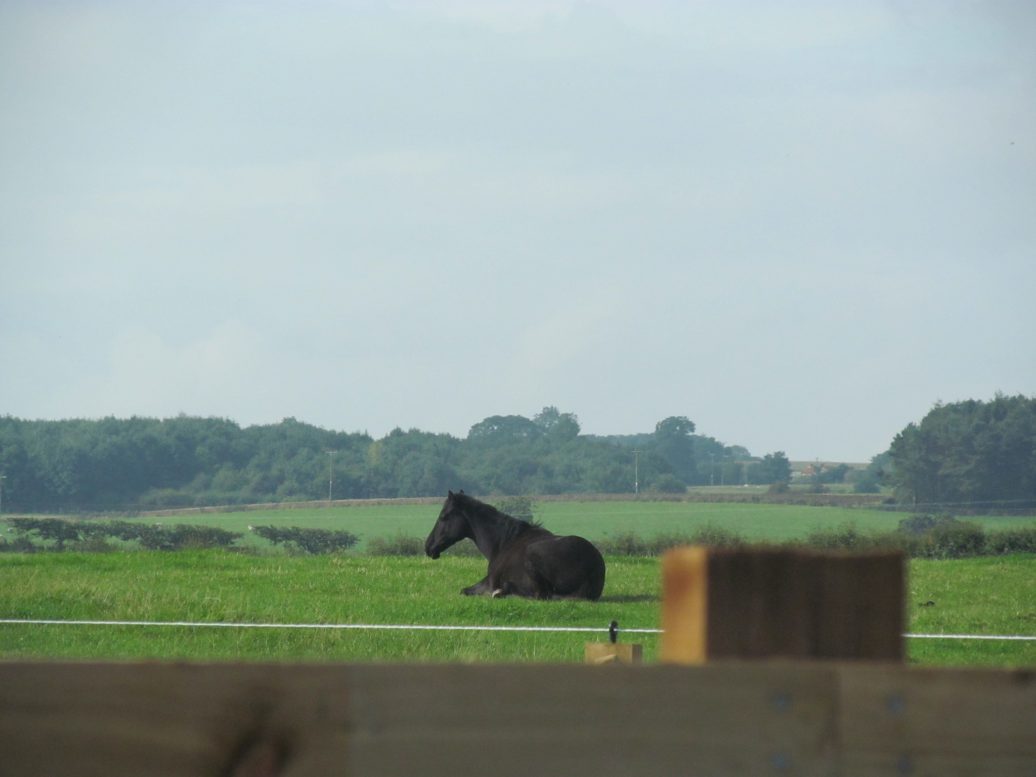Black horse by joan croll