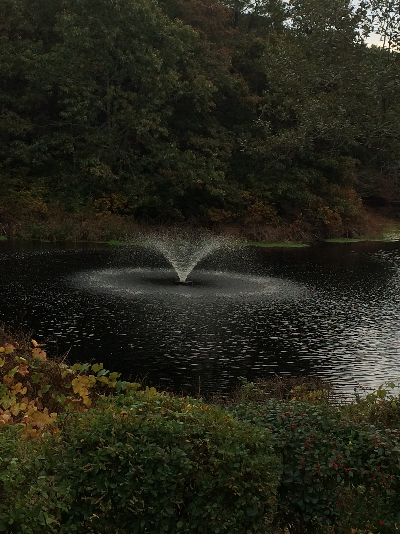Fountain in cove by Bill Whittaker