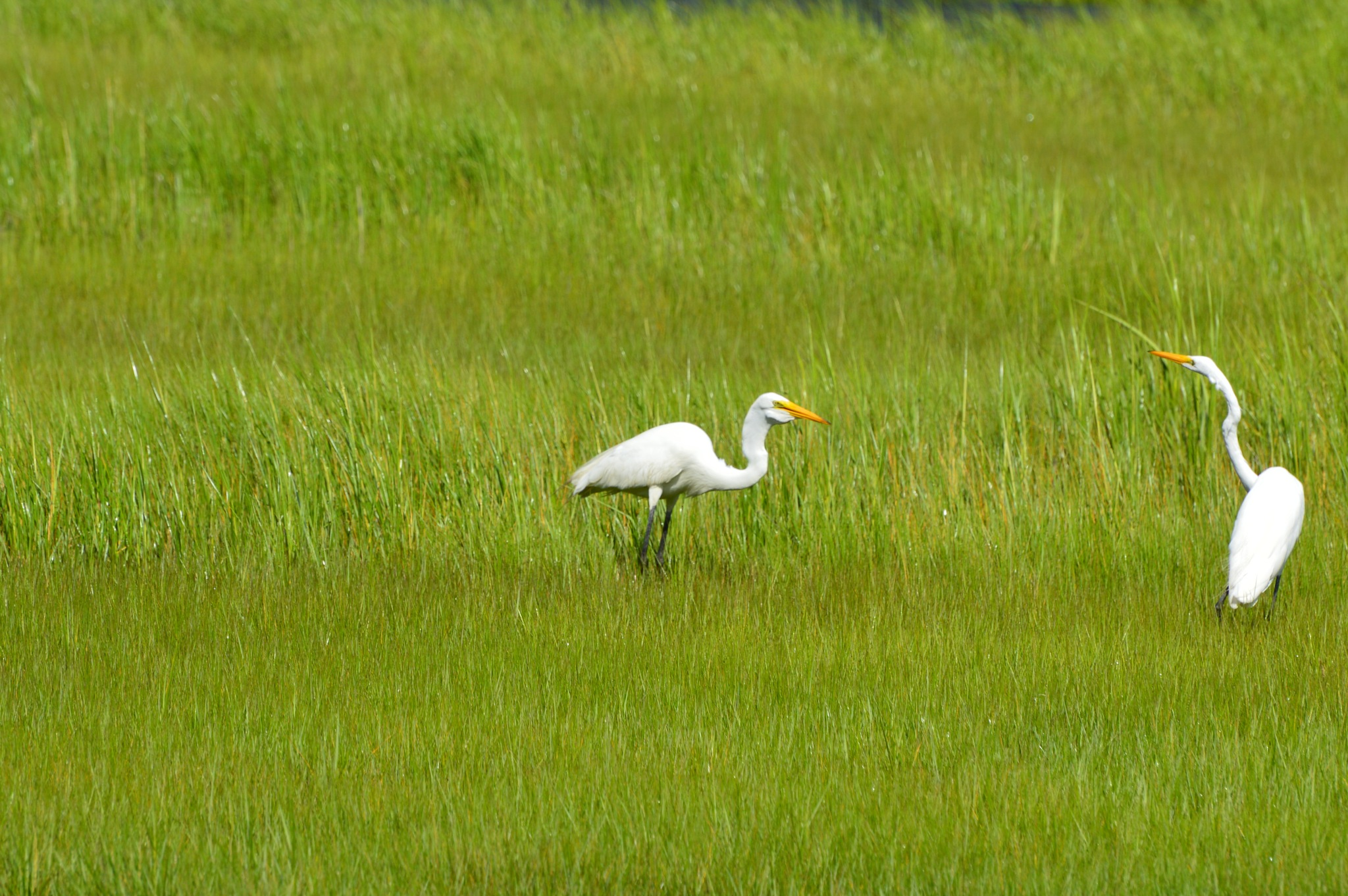 Egret With Meal by ERock23