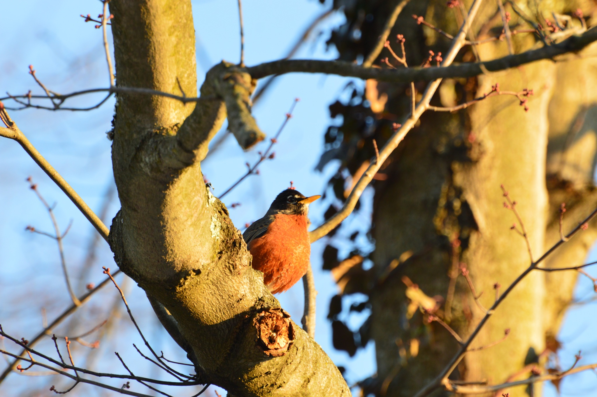 Robin by ERock23