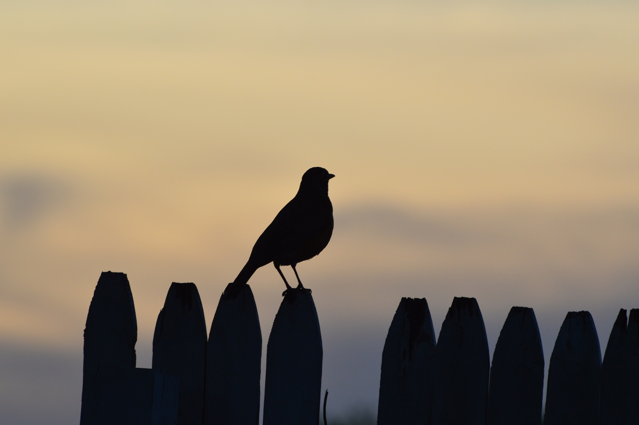 Robin at Sunset by ERock23