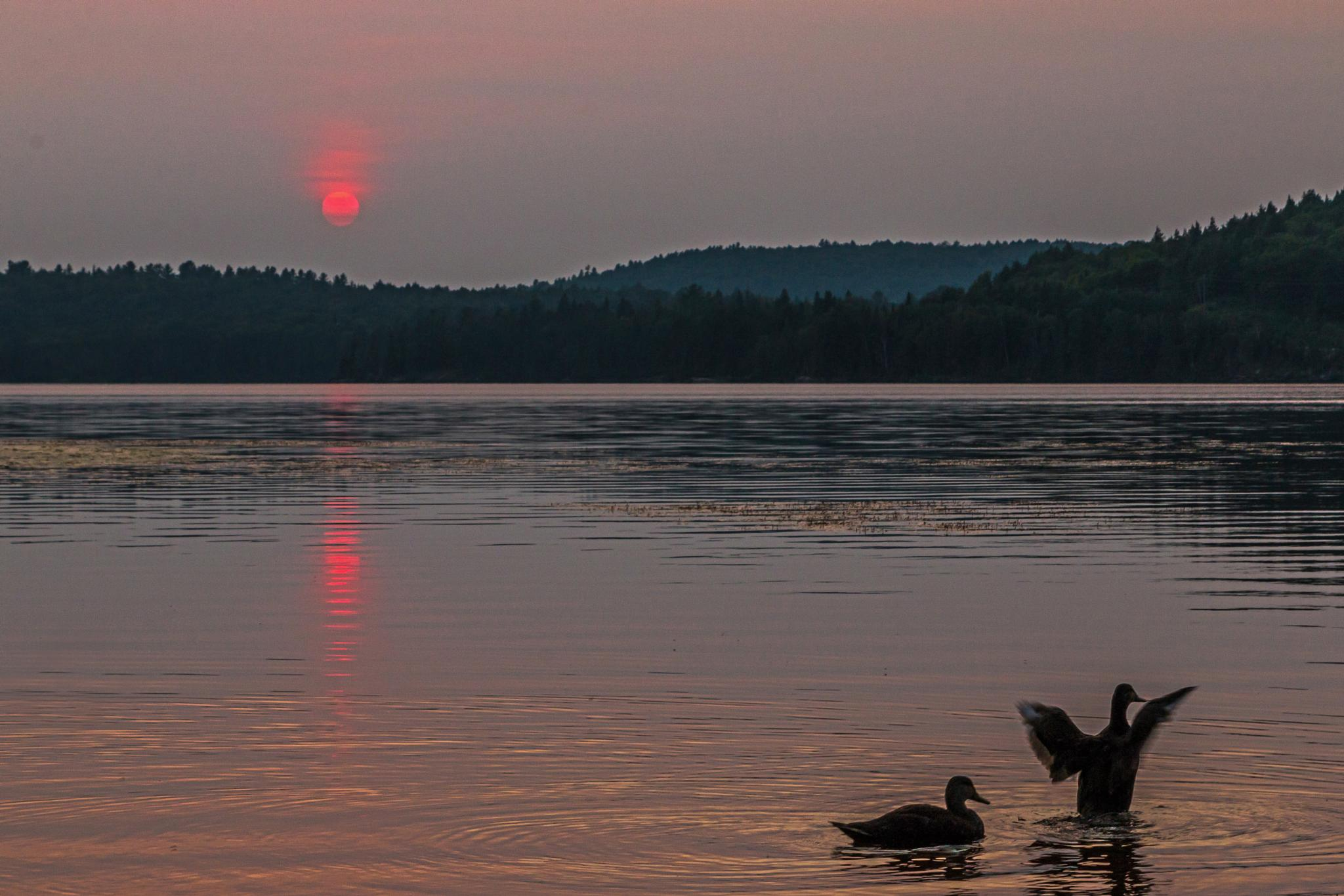 Sunset and Two Black Ducks at LOTR by Steve Dunsford