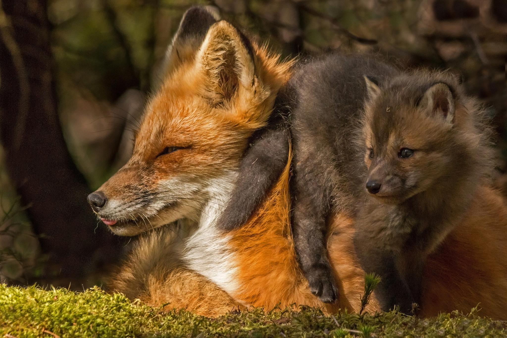 Mother and Kit by Steve Dunsford