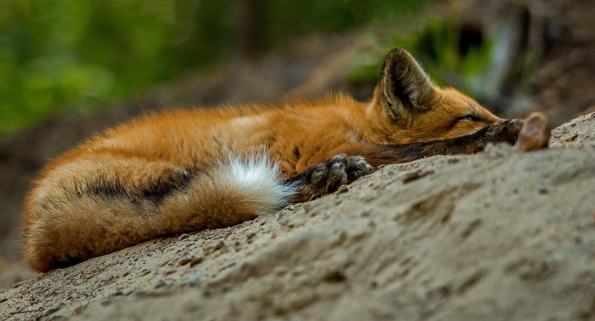 Sleepy Head by Steve Dunsford