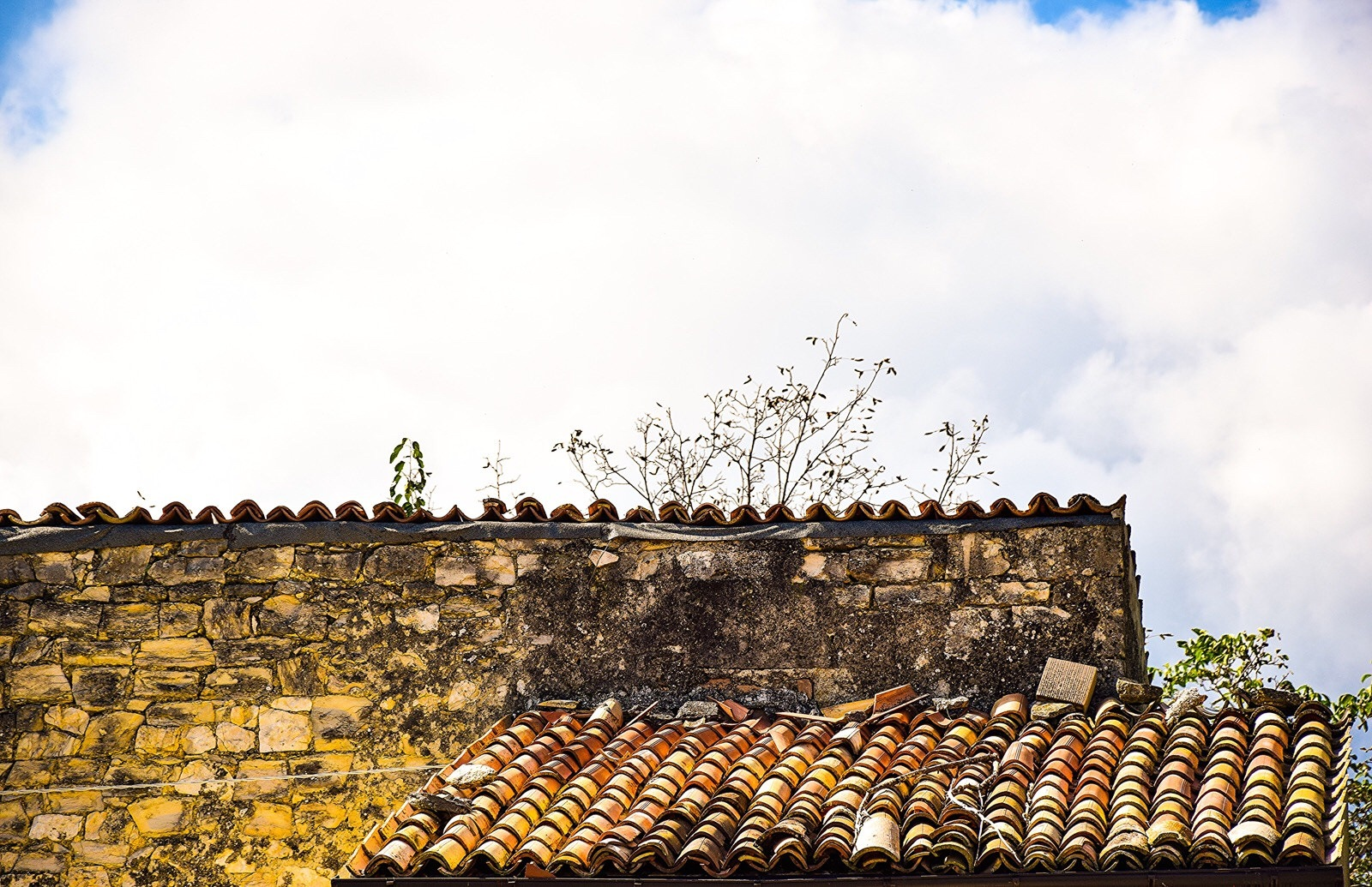 Old roofs  by Diana