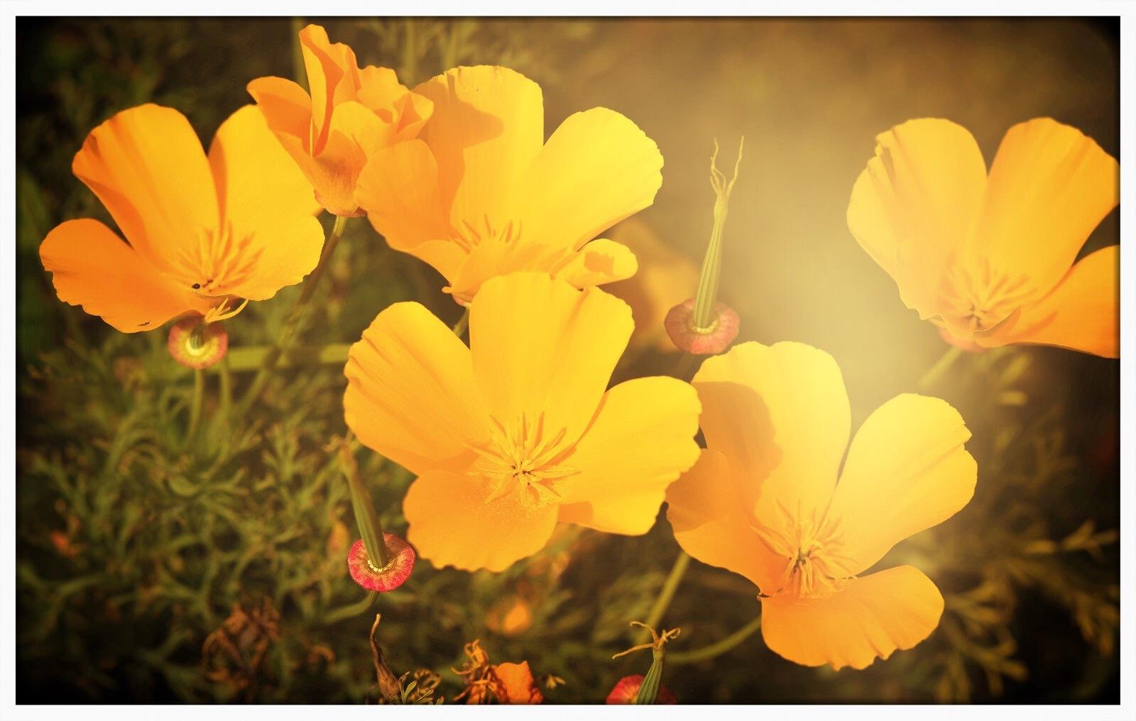 Autumn sun  by Diana
