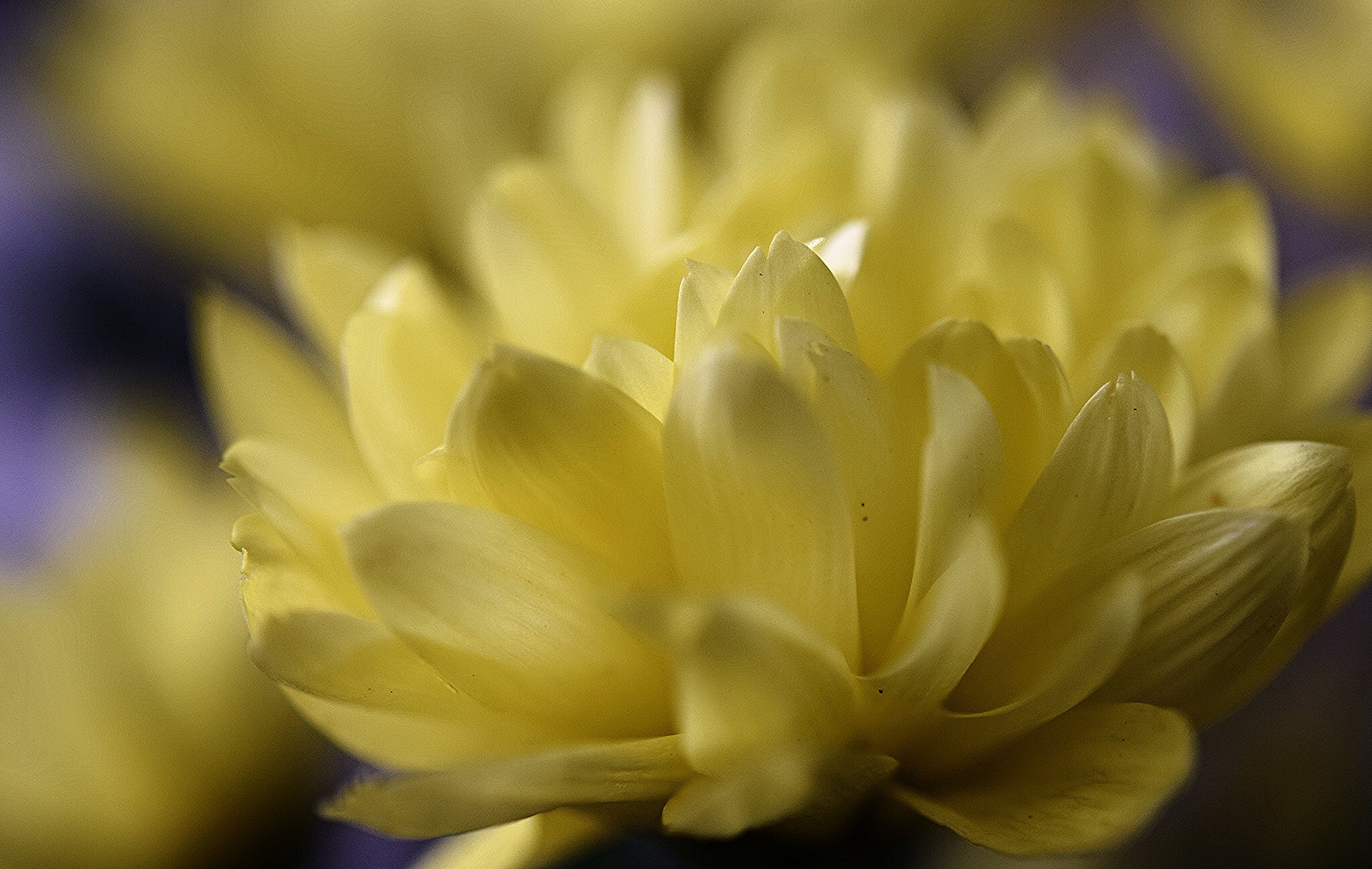 Shades of yellow by Diana