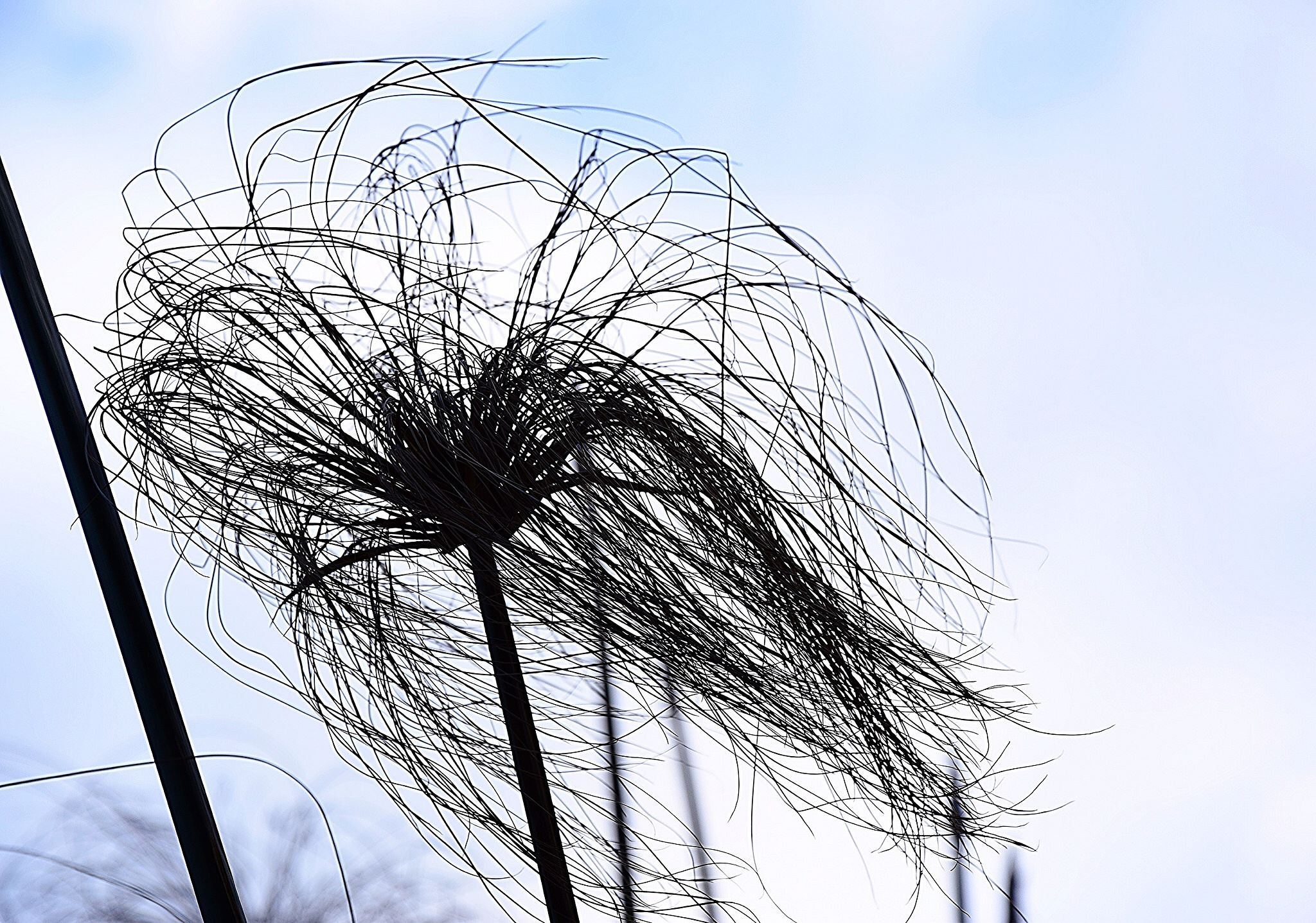 The wind  by Diana