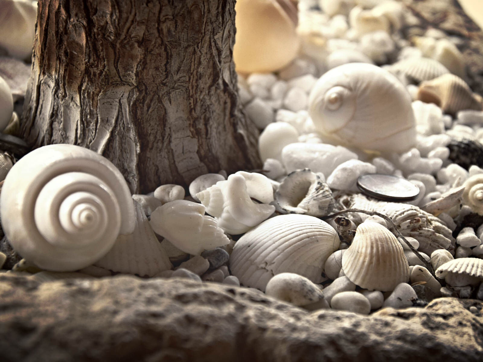 A meadow of shells by Diana