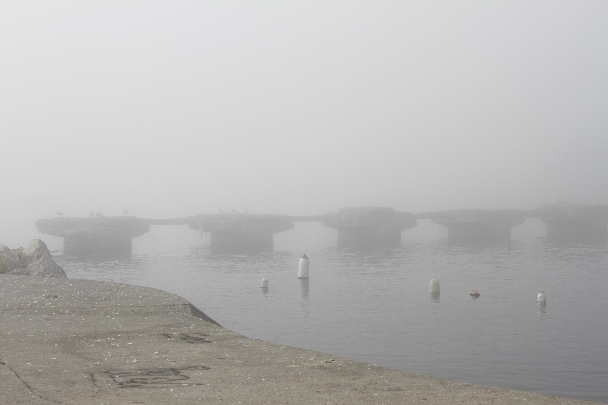 Misty by Emrah Serdaroglu